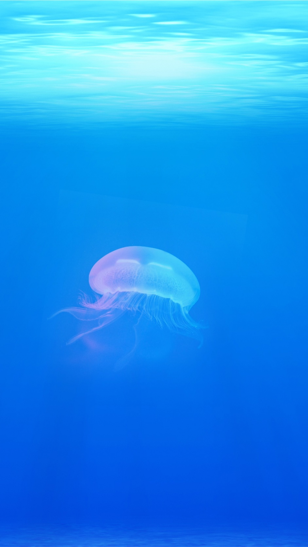 Chromatic Jellyfish Wallpaper