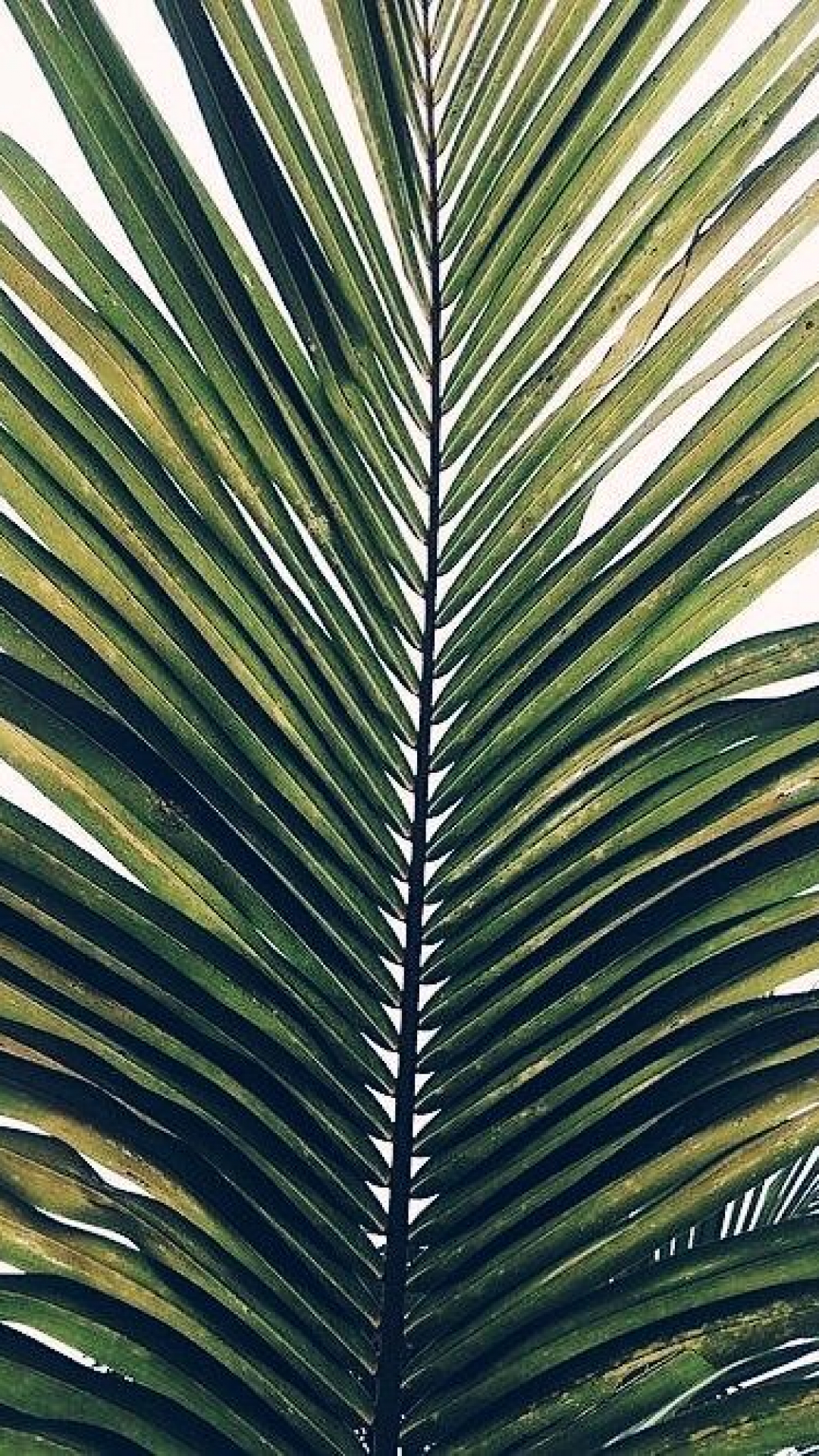 Calm Palm iPhone Wallpaper