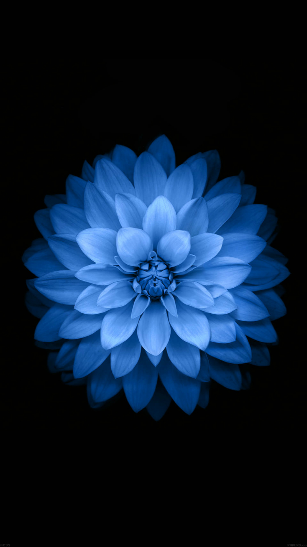 Blue Lotus iPhone 7 Wallpaper