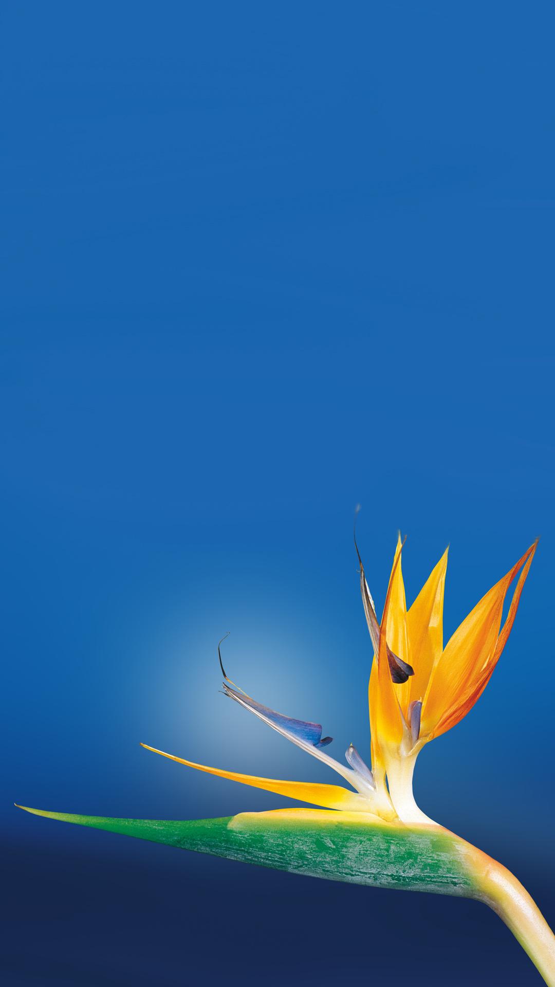 Paradise iPhone 7 Wallpaper