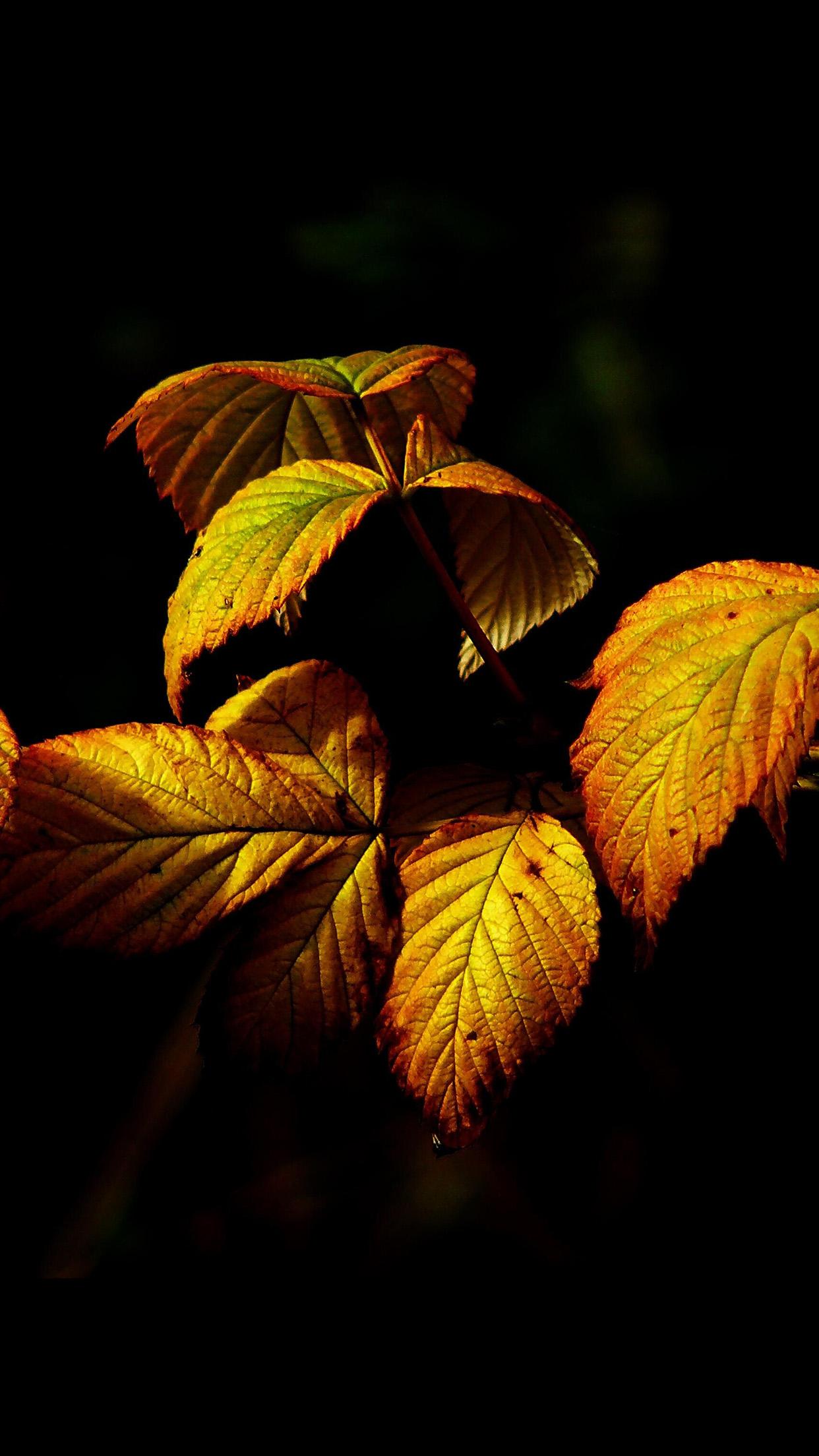 Fall Leaves iPhone 7 Wallpaper | iDrop News