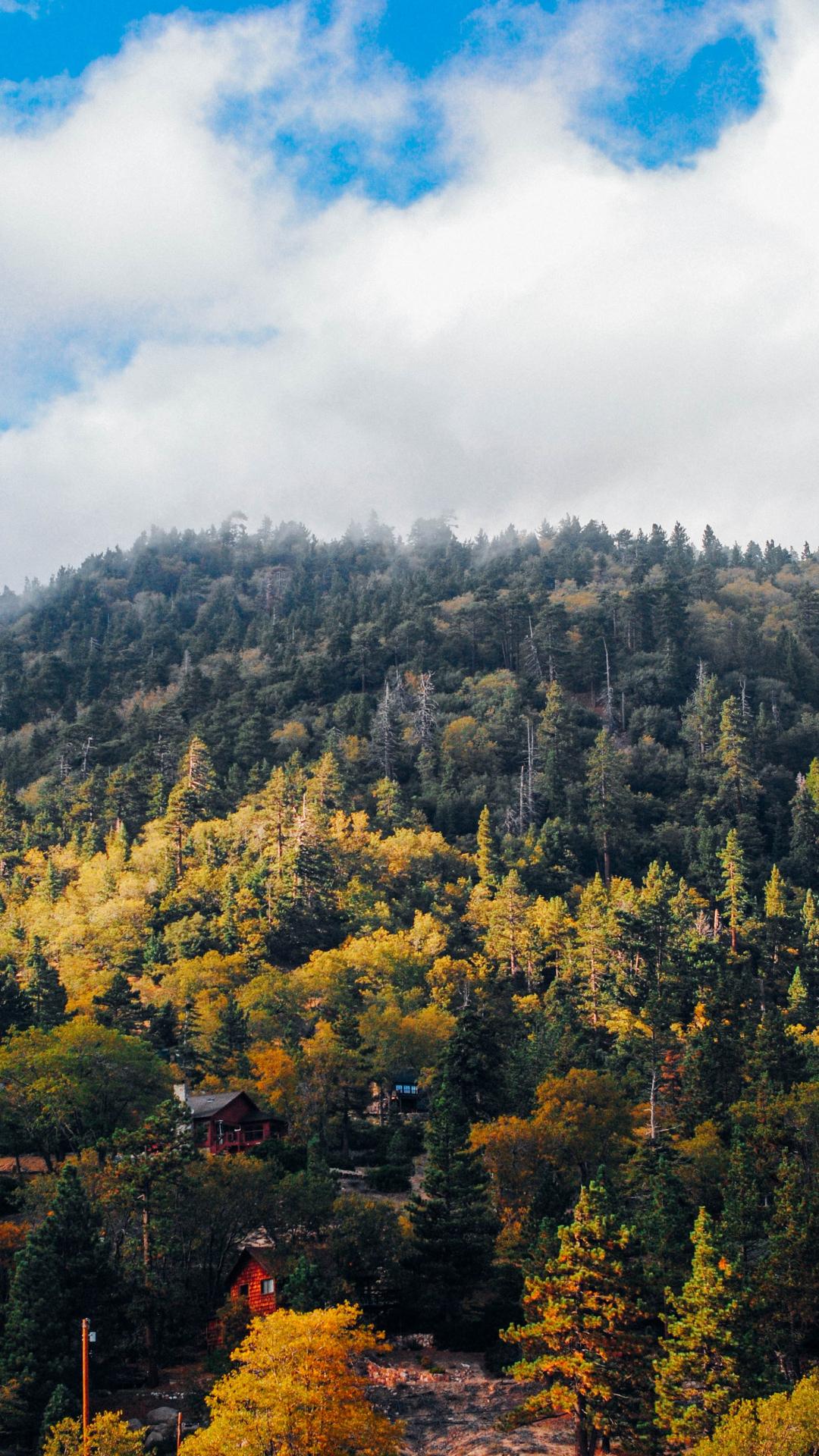 Autumn Mist iPhone Wallpaper