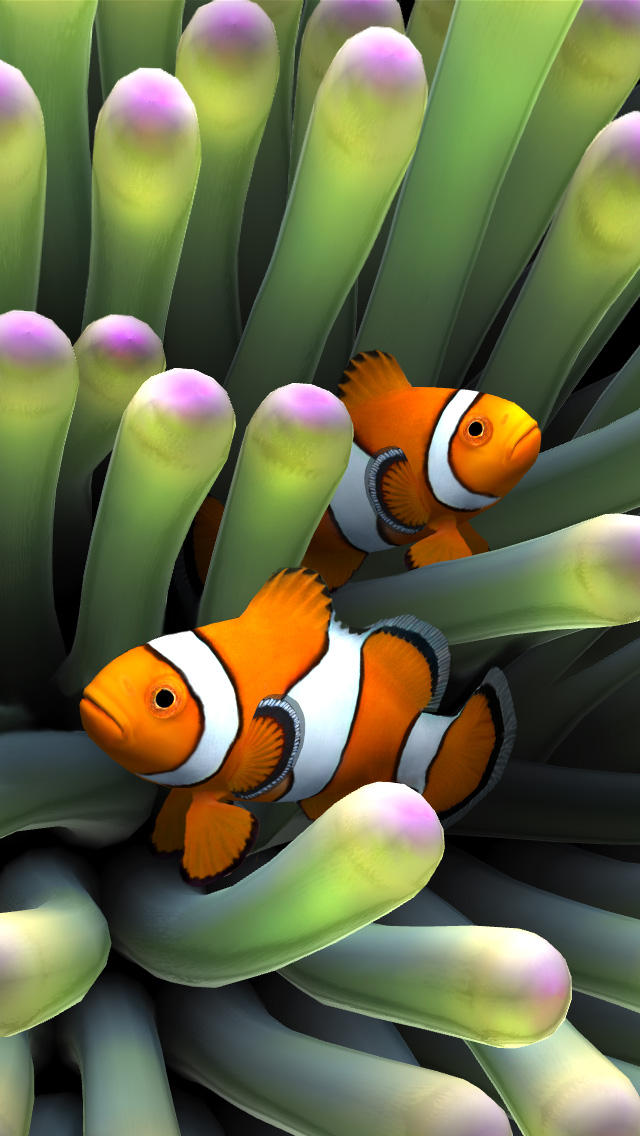 Clown Fish IPhone 8 Wallpaper