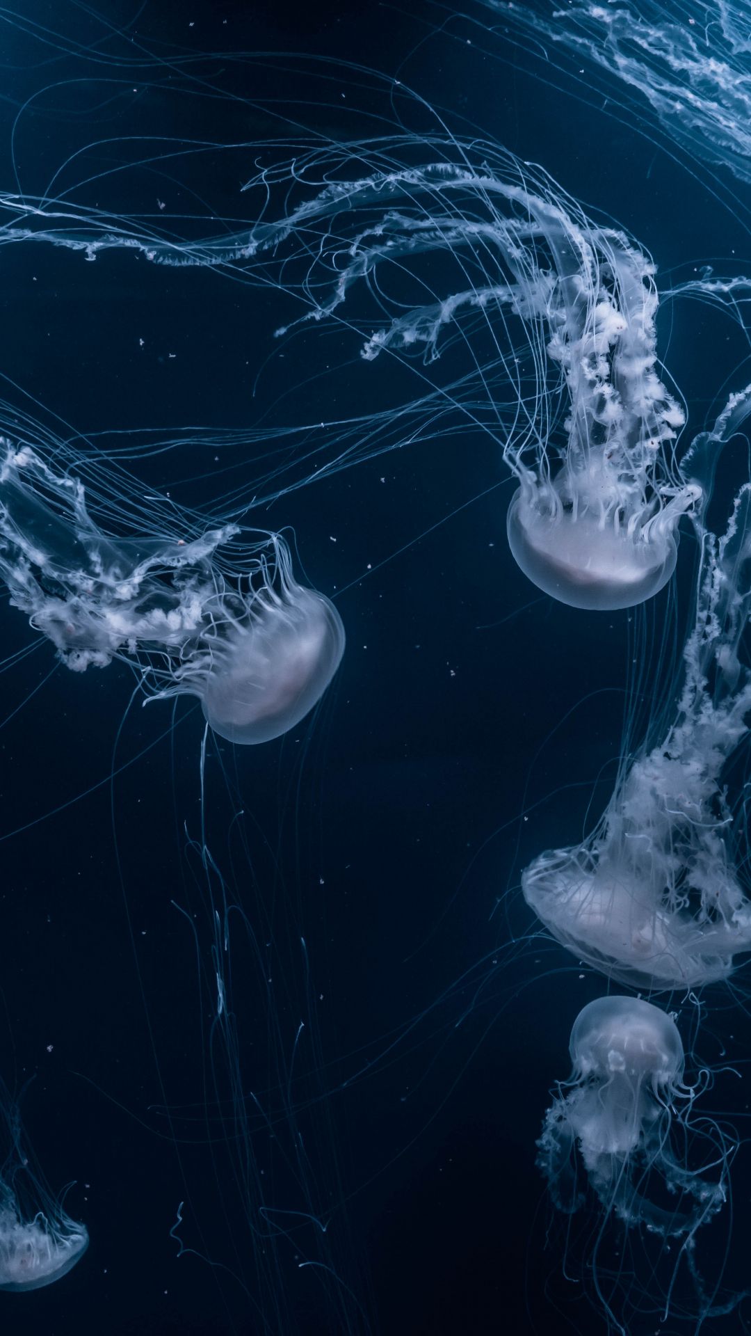 Jellyfish Depths iPhone Wallpaper