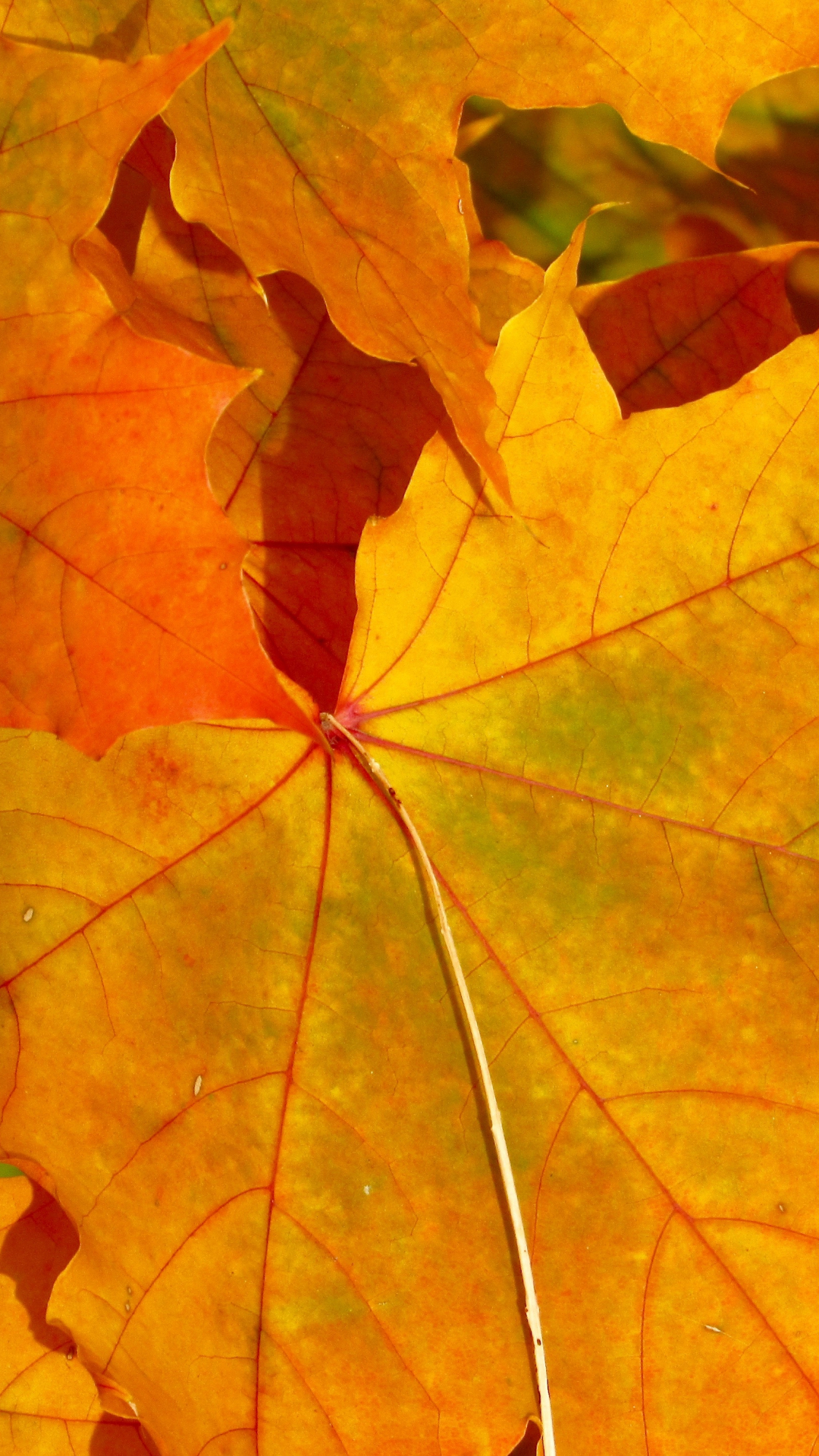 Fall Leaves iPhone Wallpaper