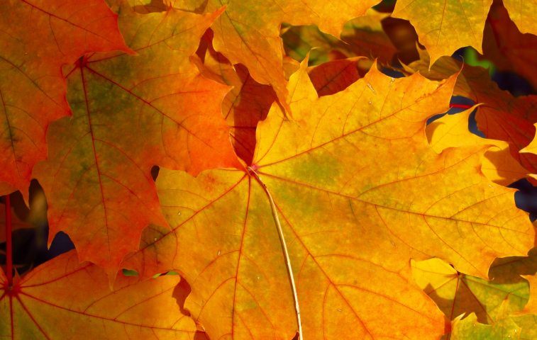 Autumn-tree-fall-orange-yellow-iphone-wallpaper