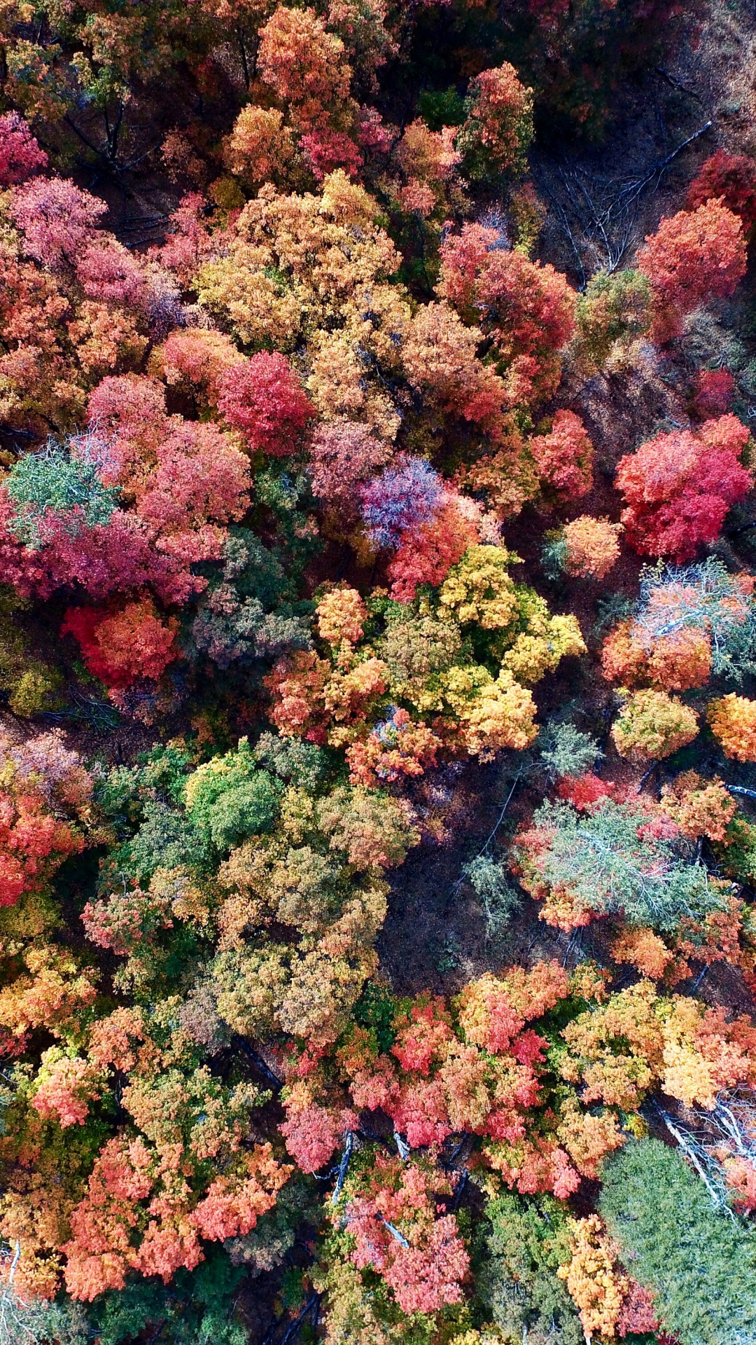 Colors of Fall iPhone Wallpaper