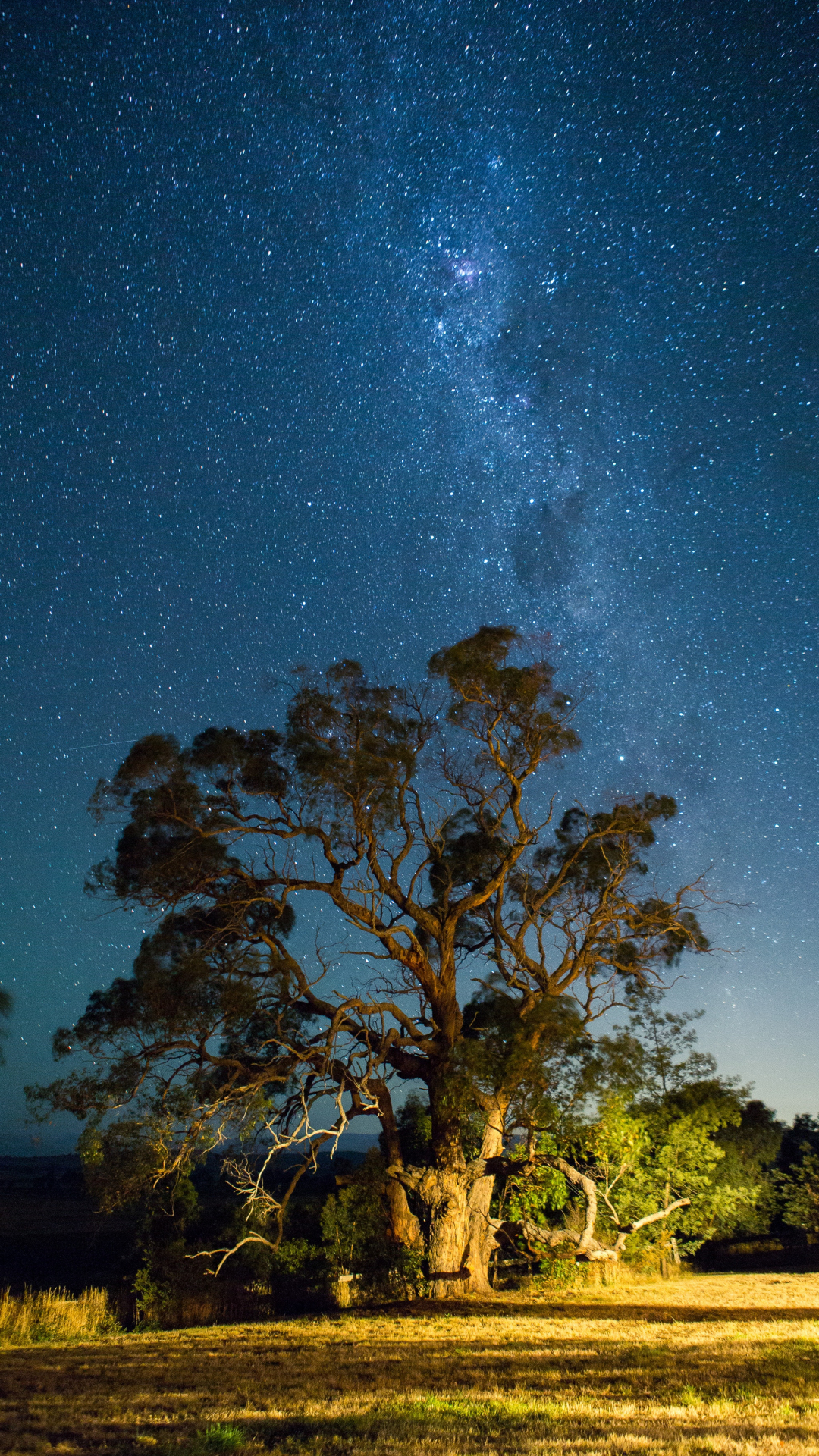 Tree, Star, Sky And Milky iPhone Wallpaper