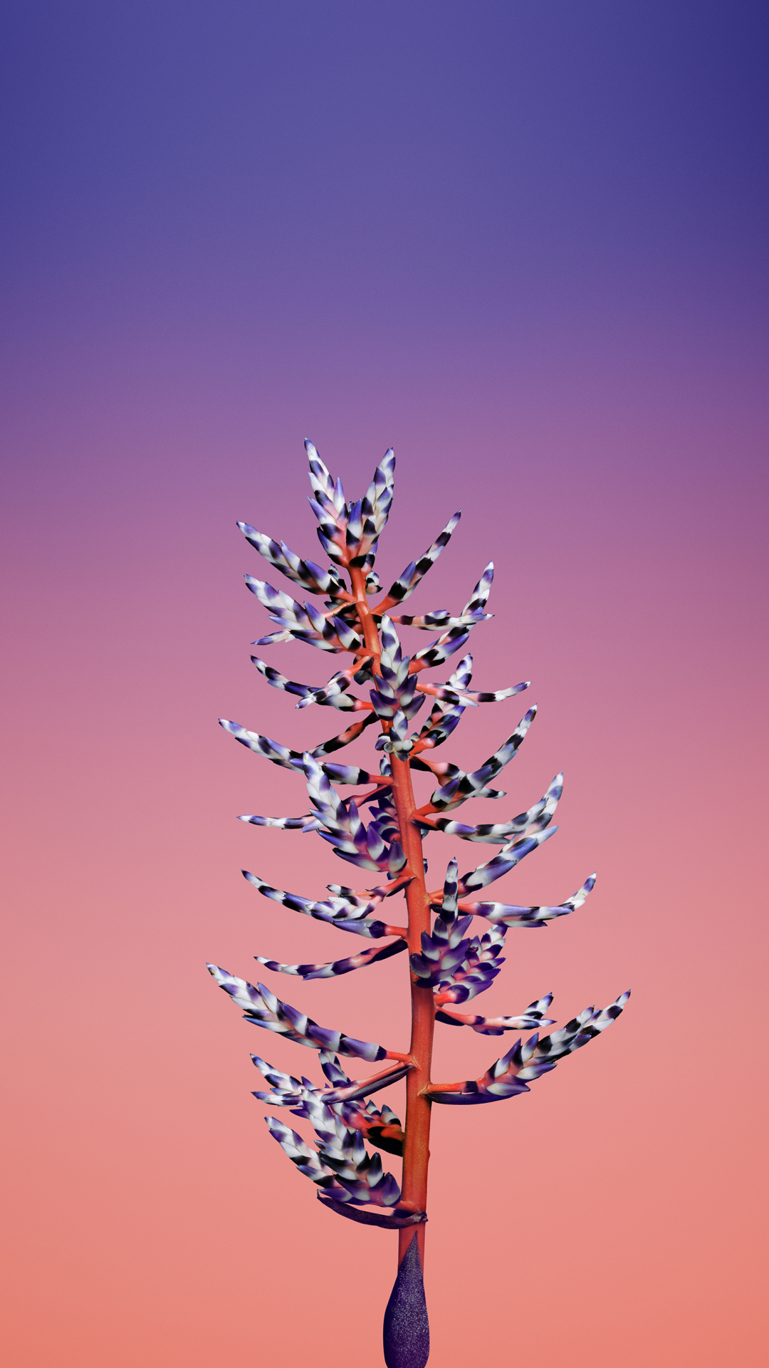 Flower Aechmea iPhone Wallpaper