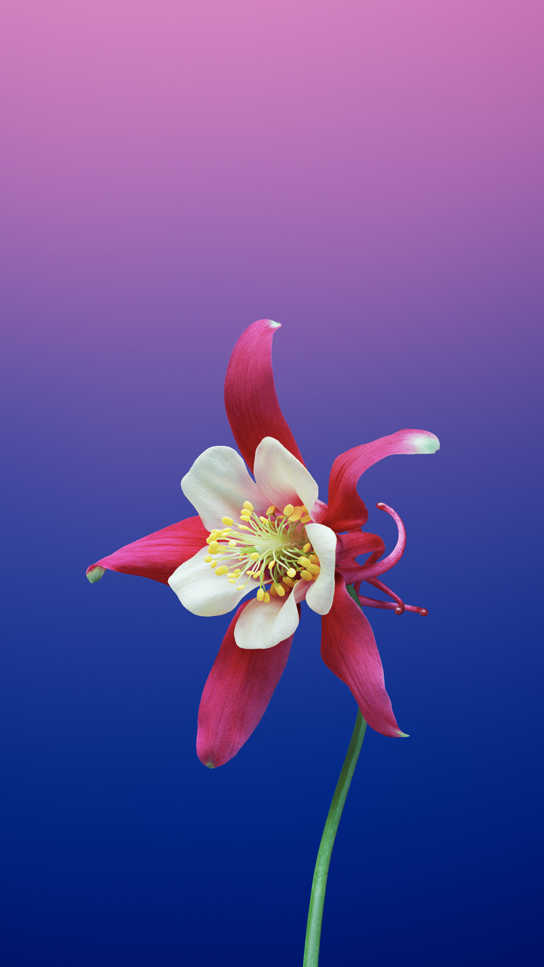 Flower Aquilegia iPhone Wallpaper