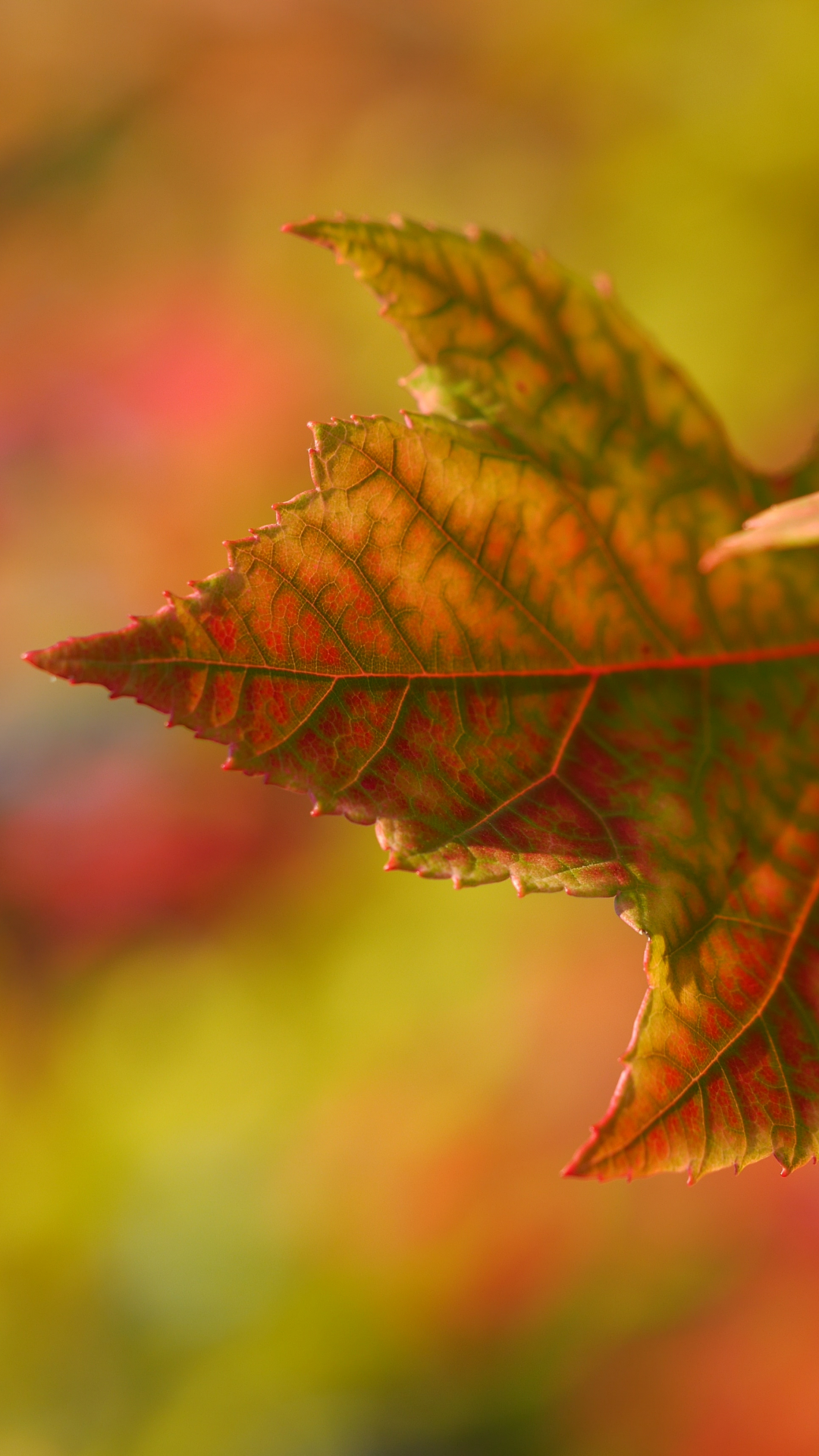 Autumn, Leaf, Fall iPhone Wallpaper