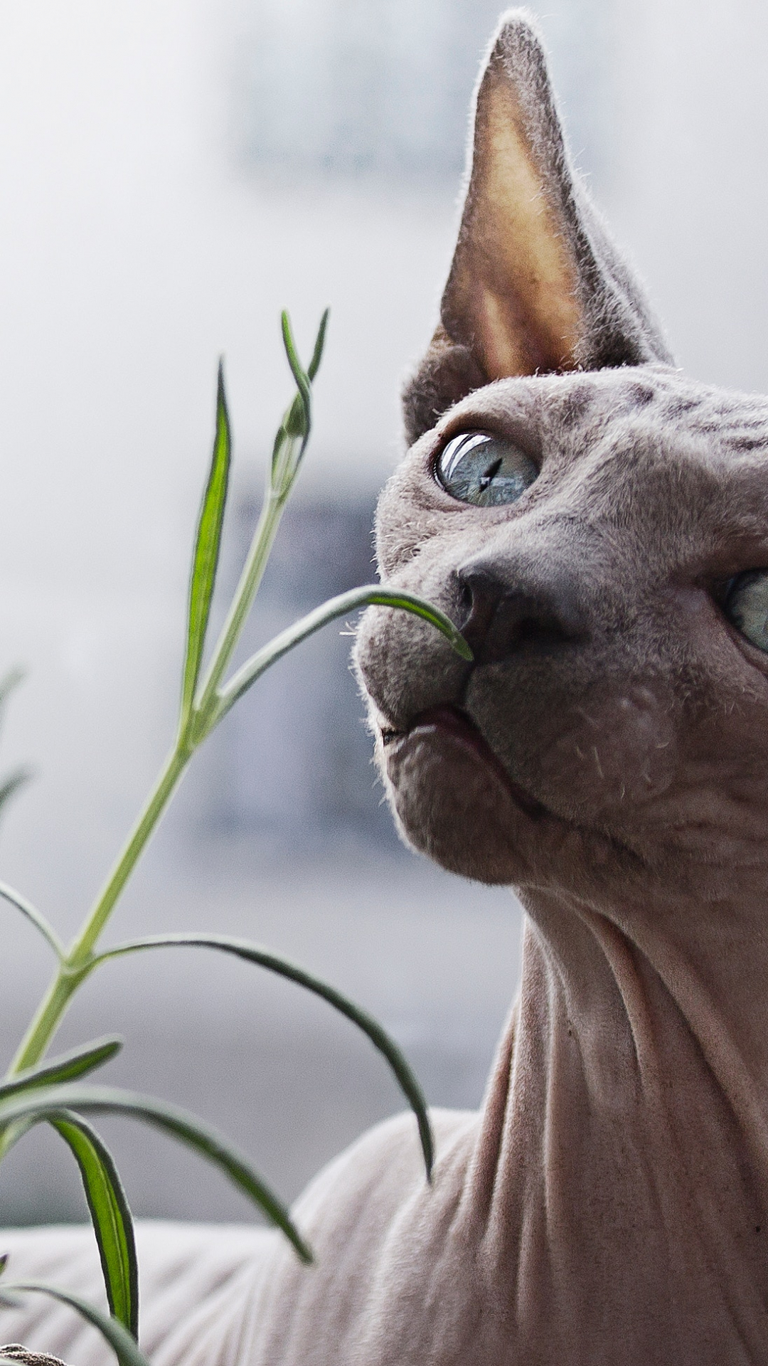 Hairless Cat And A Plant iPhone Wallpaper