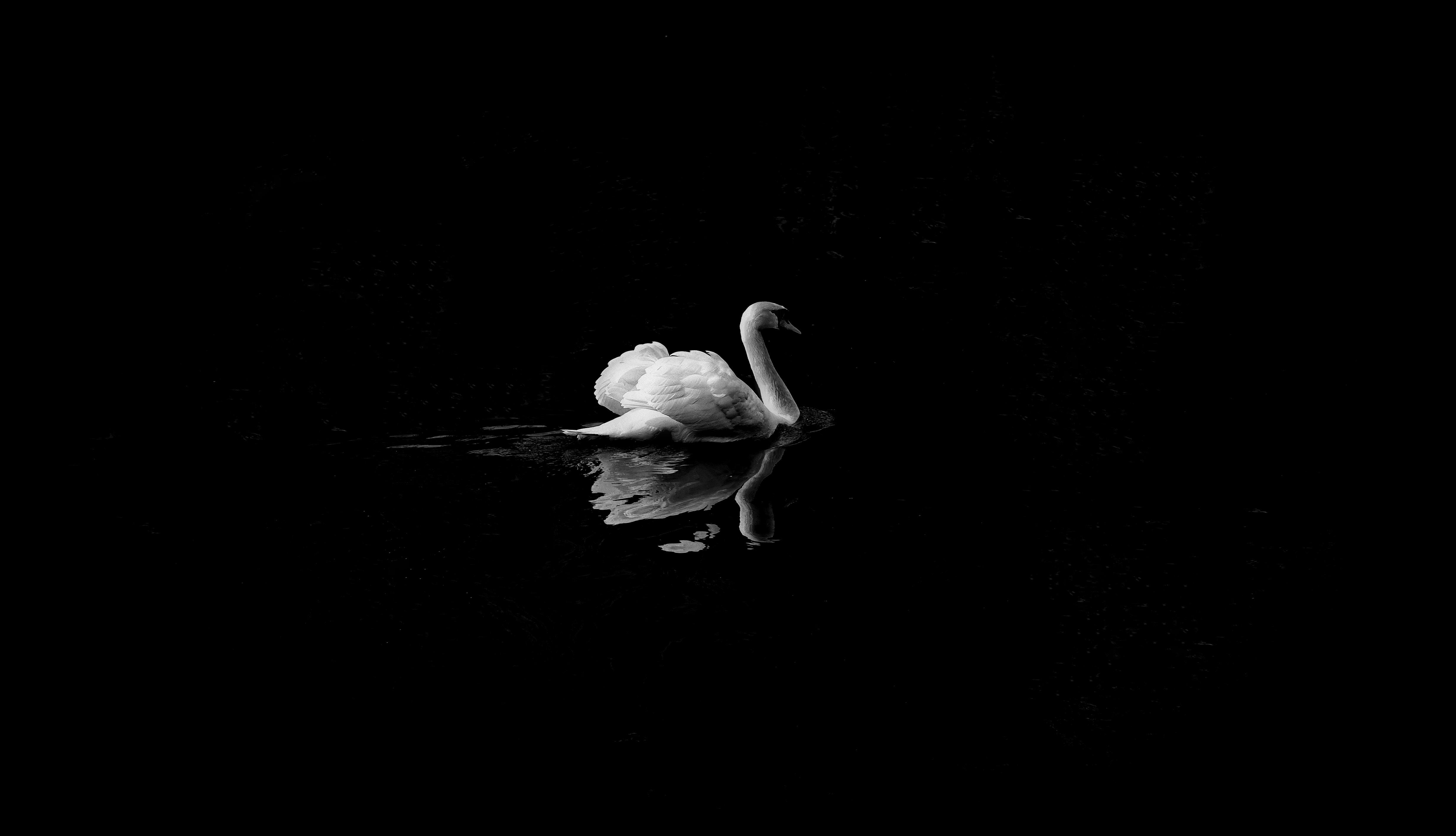Animal, Black And White iPhone Wallpaper - iDrop News