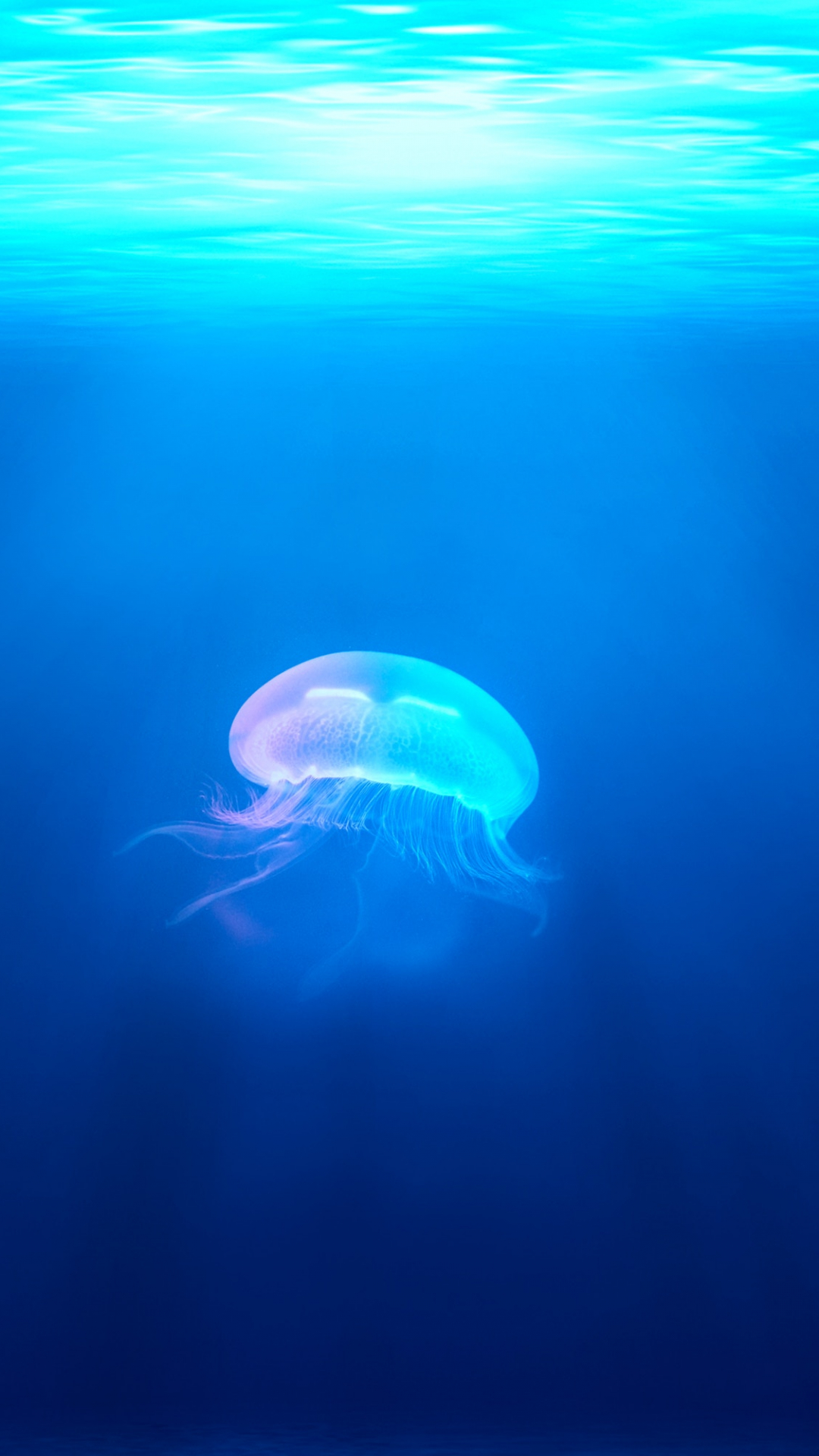 Jellyfish, Water, Ocean iPhone Wallpaper