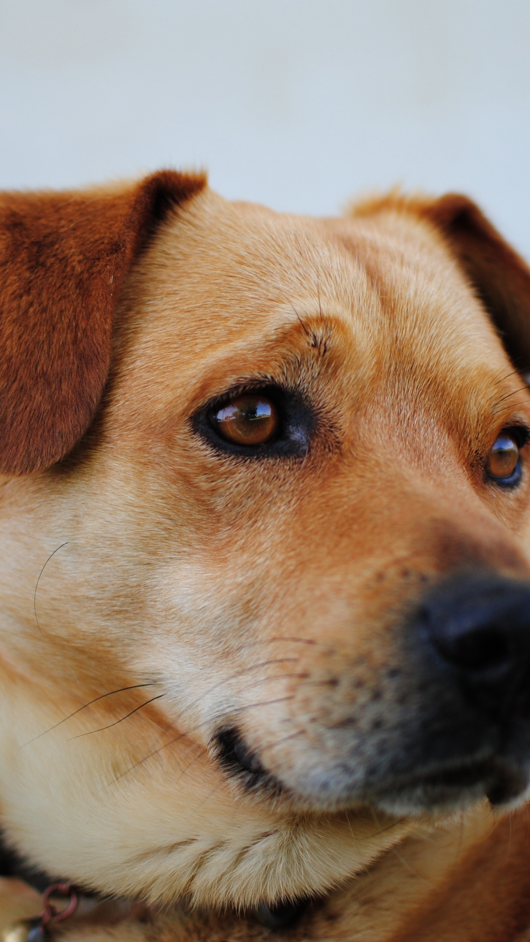 dog animal pet puppy iphone wallpaper idrop news