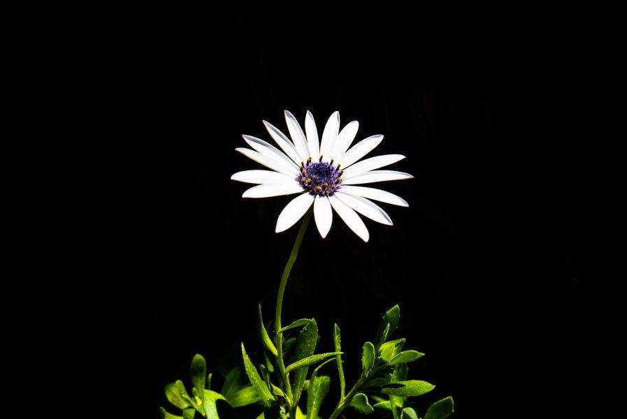 Flower, White, Plant iPhone Wallpaper - iDrop News