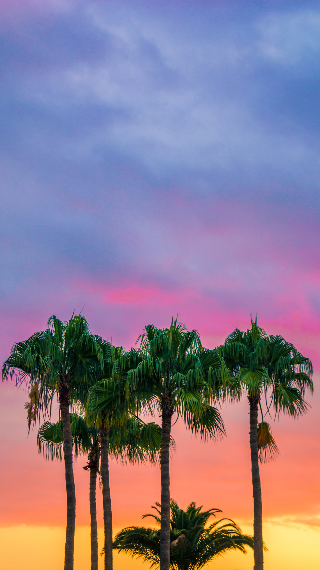 Colorful, Palm Trees iPhone Wallpaper