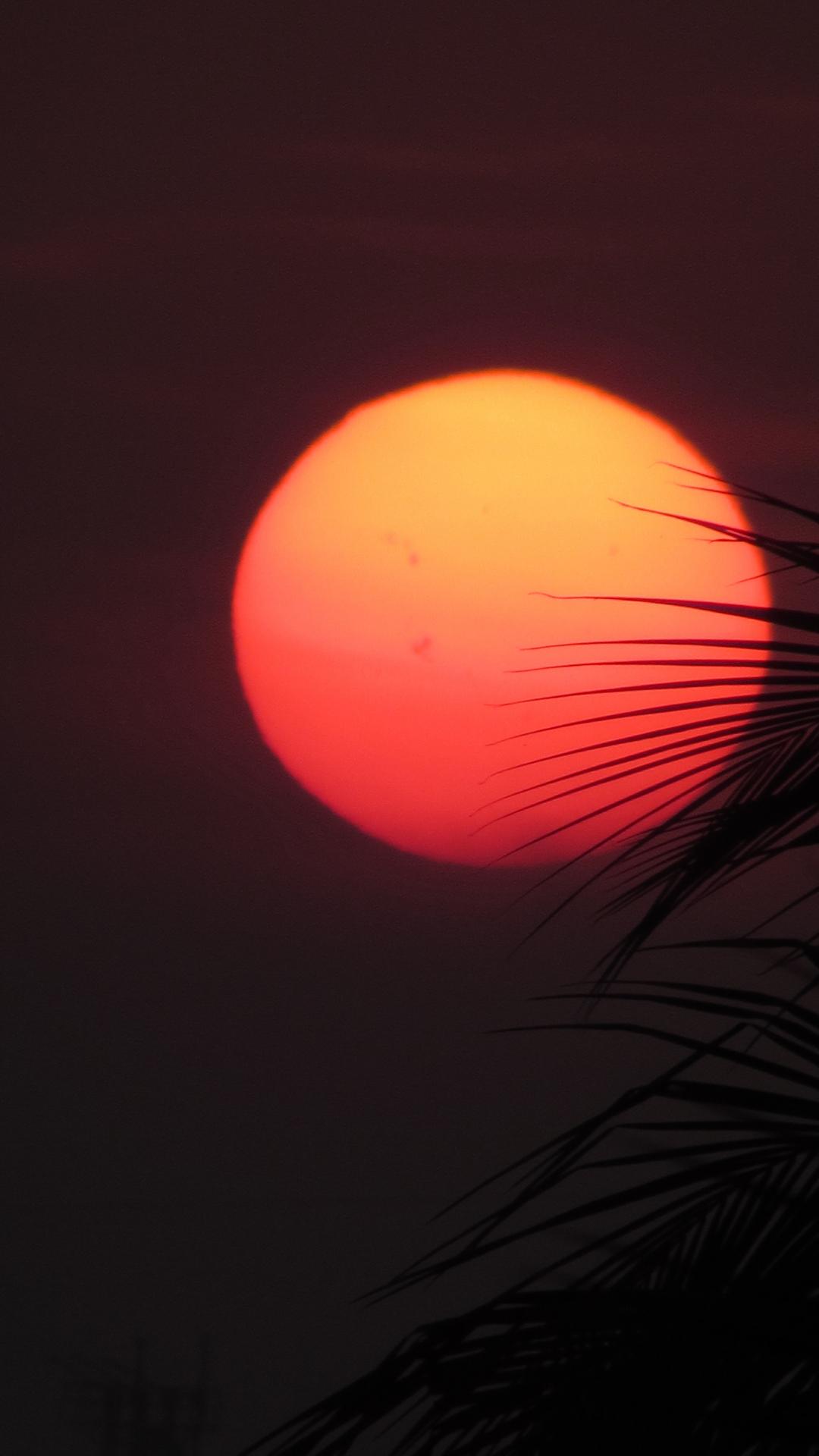Red Orange Sun Leaves iPhone Wallpaper