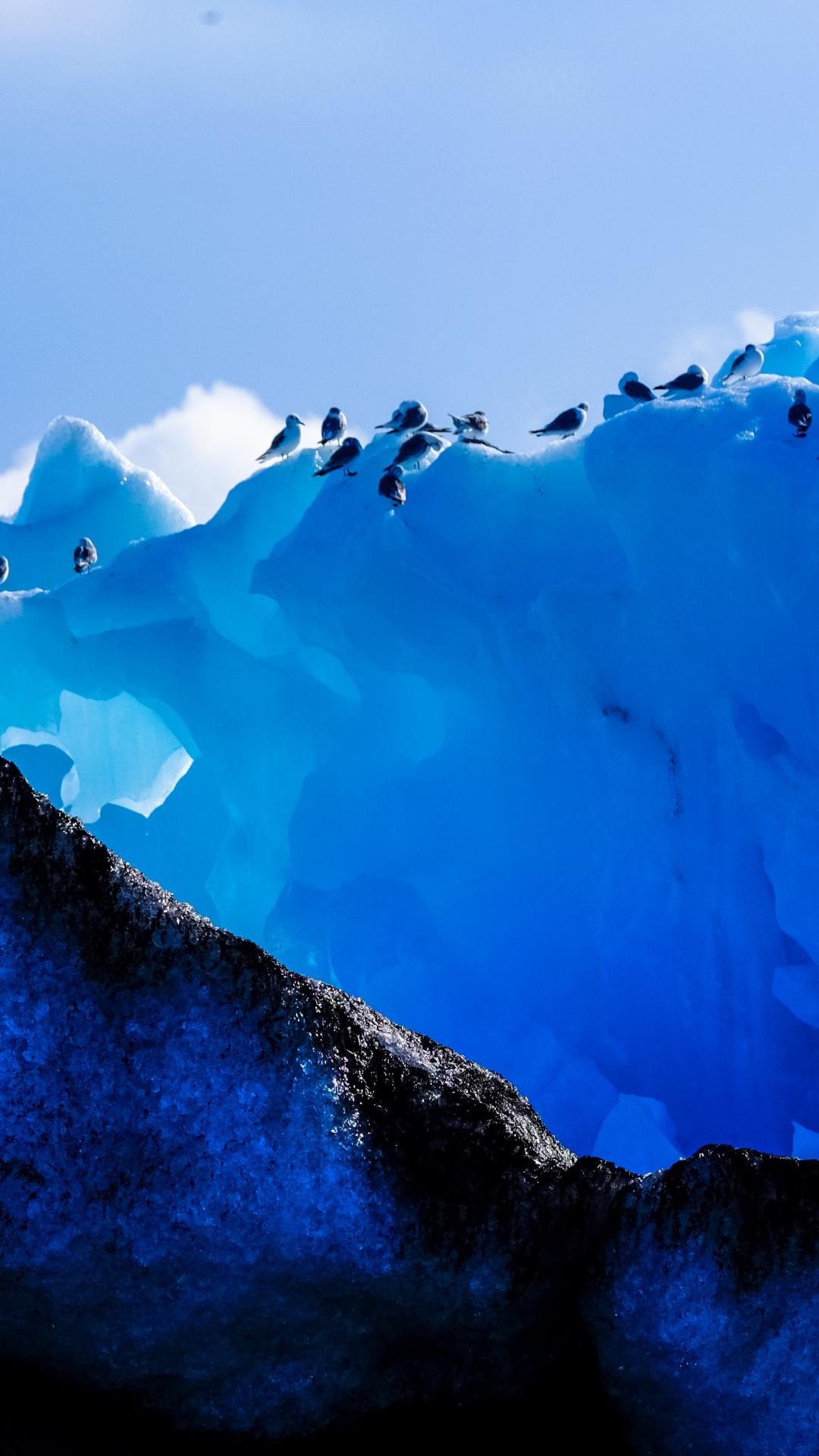 Ice Birds iPhone Wallpaper