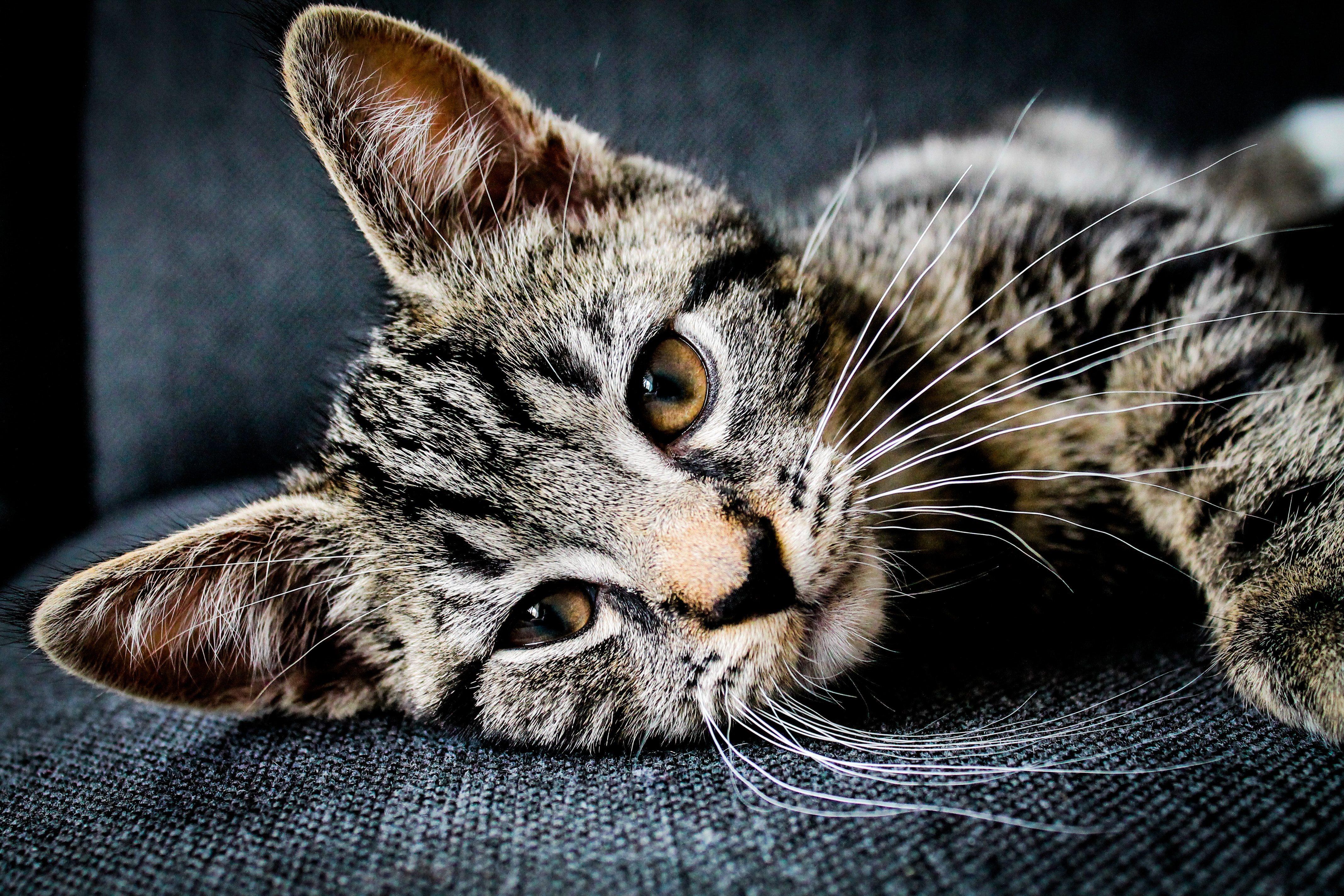 Cat Resting Iphone Wallpaper Idrop News