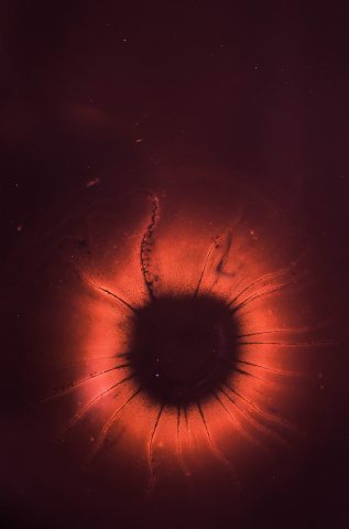The-Nucleus-Of-An-Atom-iPhone-Wallpaper