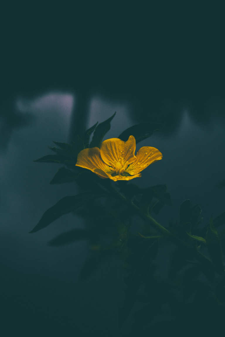 Yellow Flower Iphone Wallpaper Idrop News
