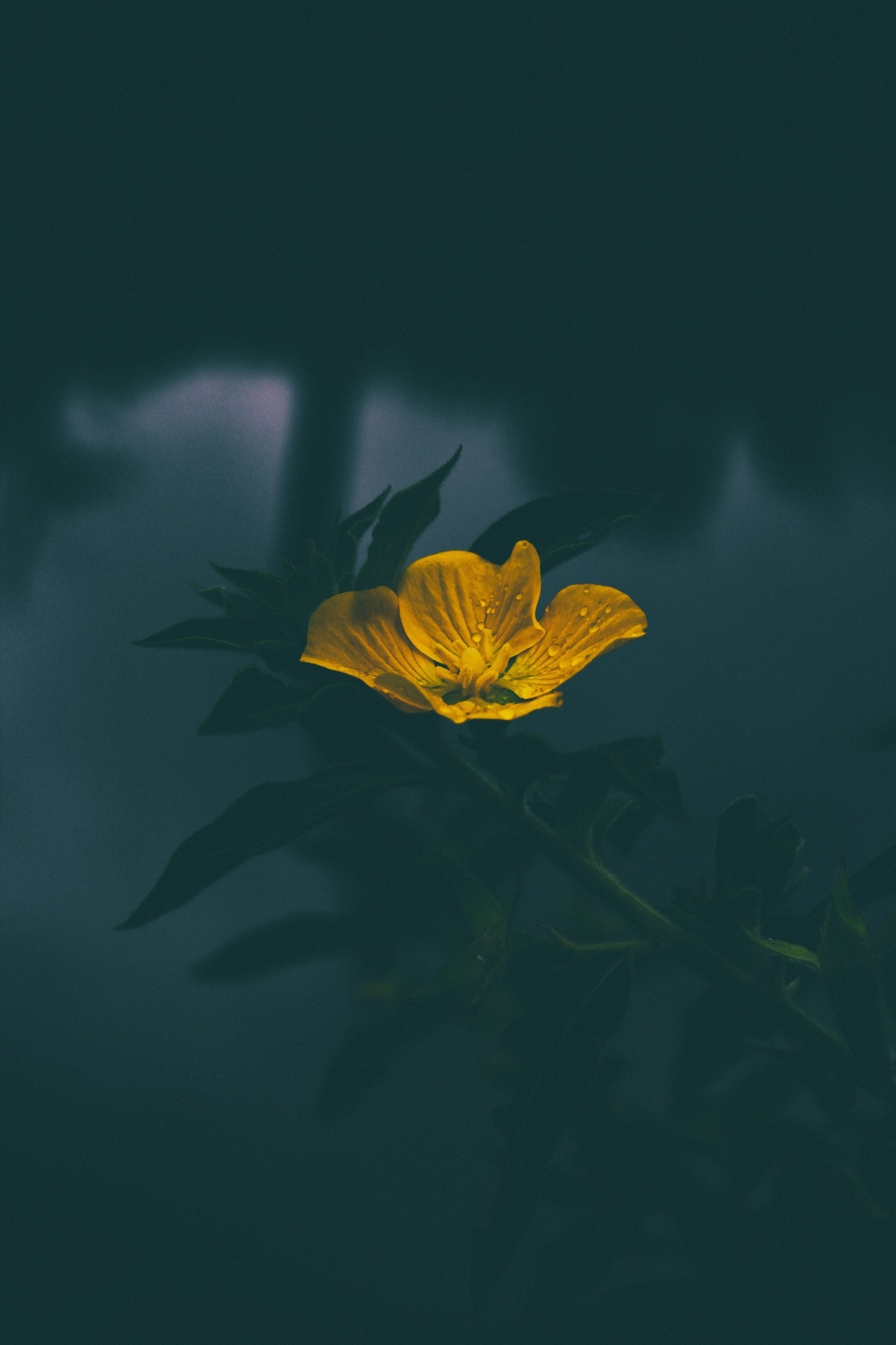 Yellow Flower Iphone Wallpaper Idrop News