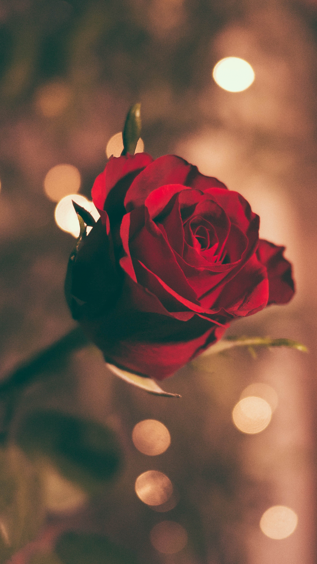 A Rose Iphone Wallpaper Idrop News