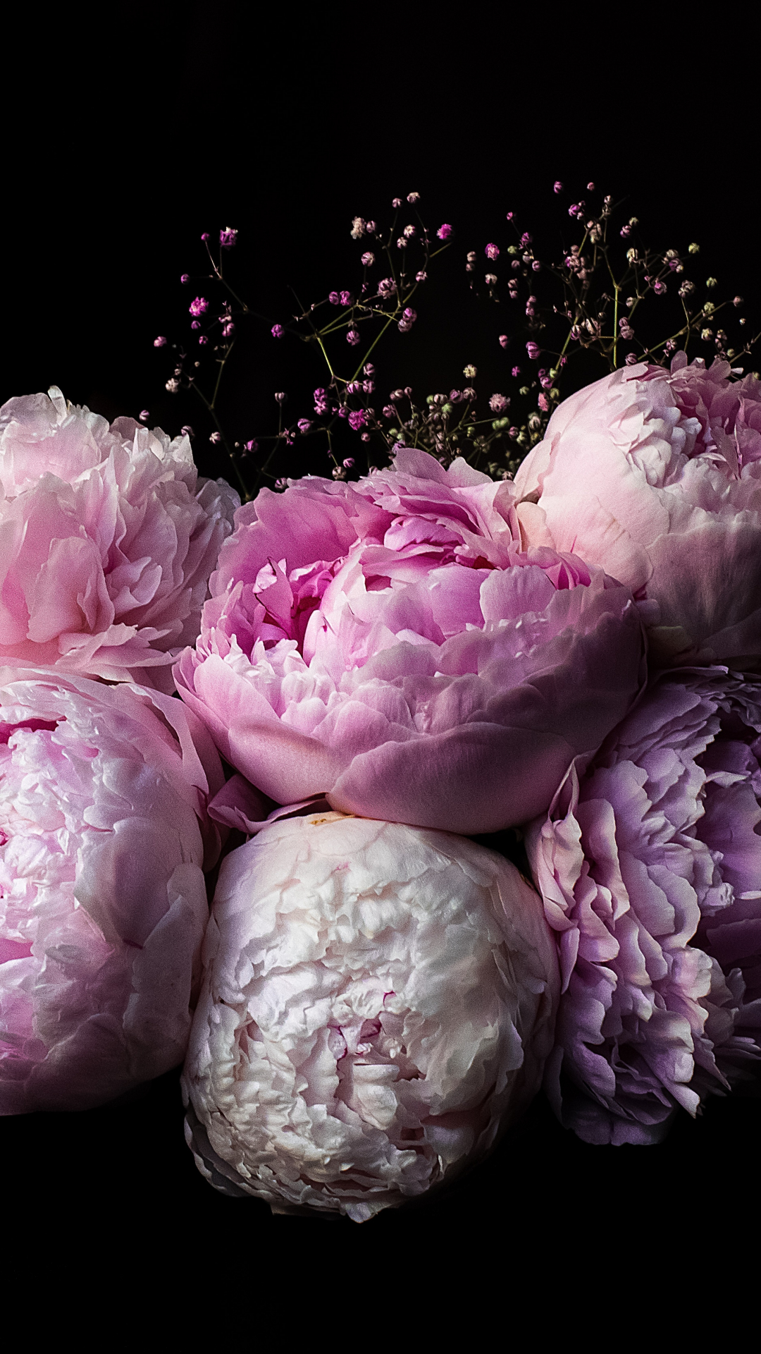 Peonies iPhone Wallpaper - iDrop News