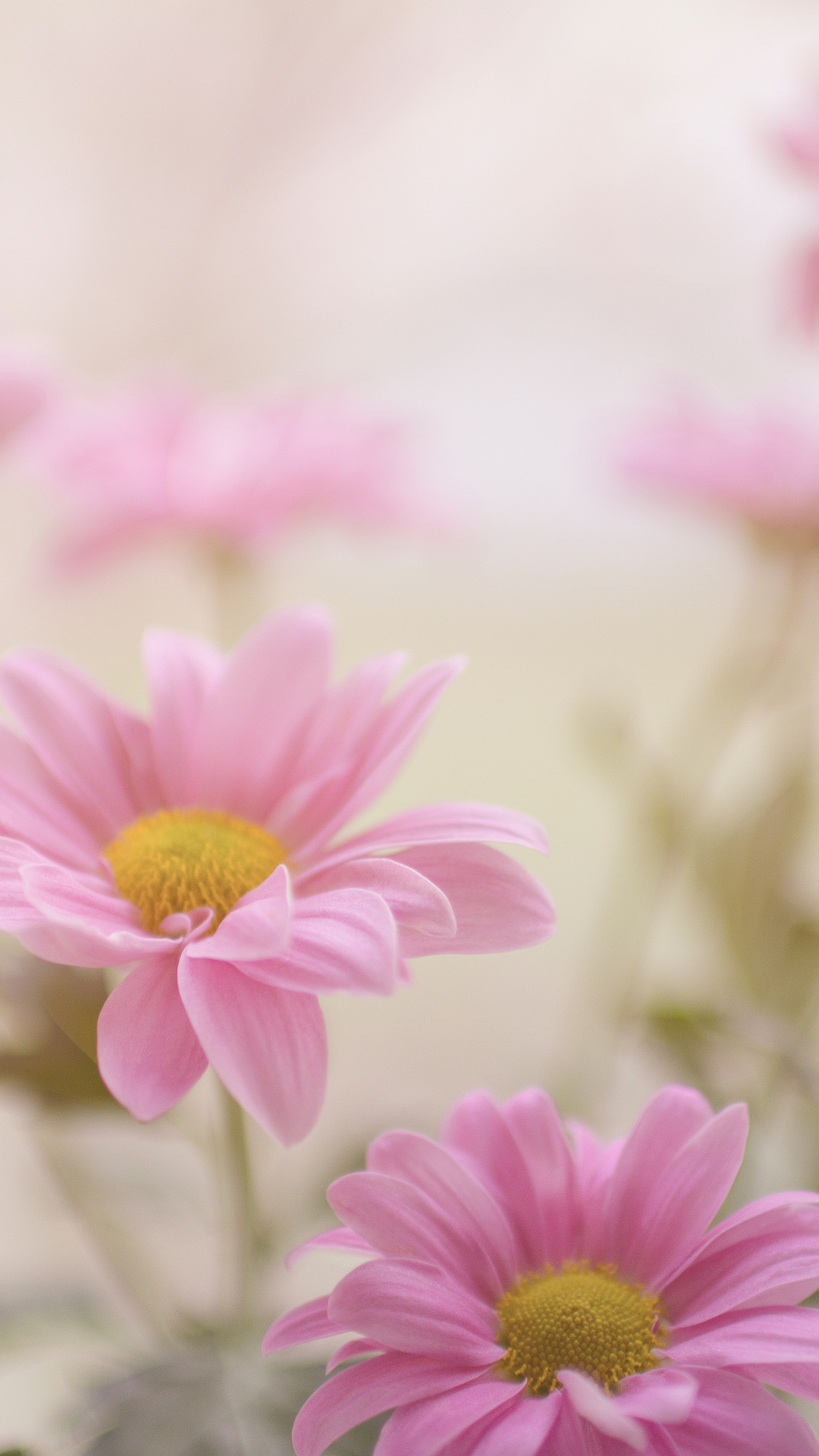Pink And Daisy iPhone Wallpaper
