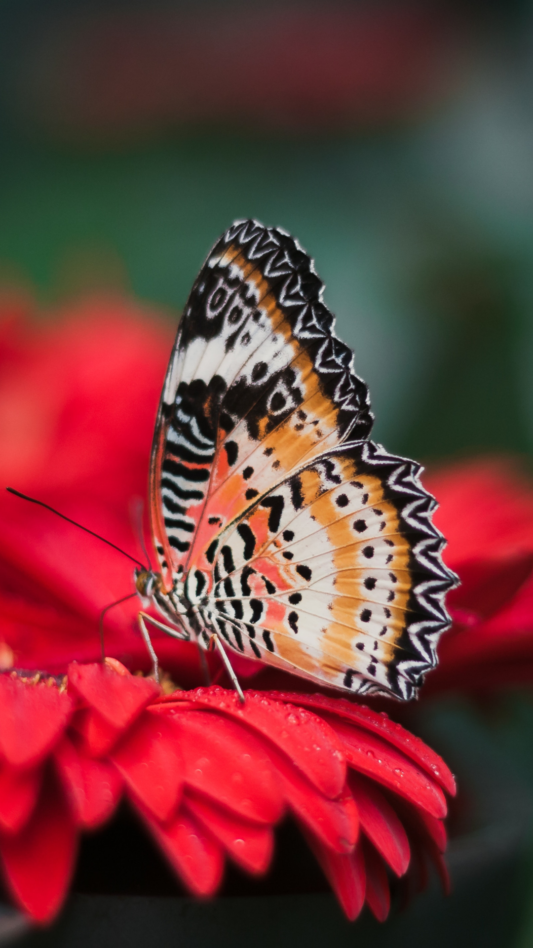 Butterfly On A Flower Iphone Wallpaper Idrop News