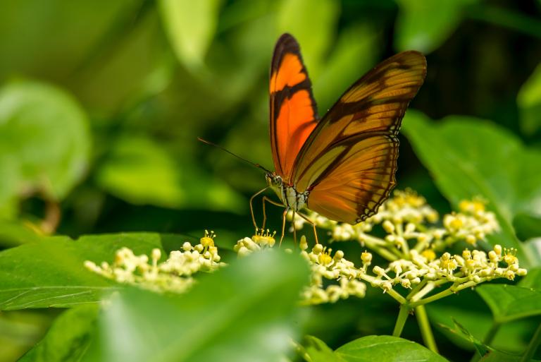 Graceful Butterfly iPhone Wallpaper   iDrop News