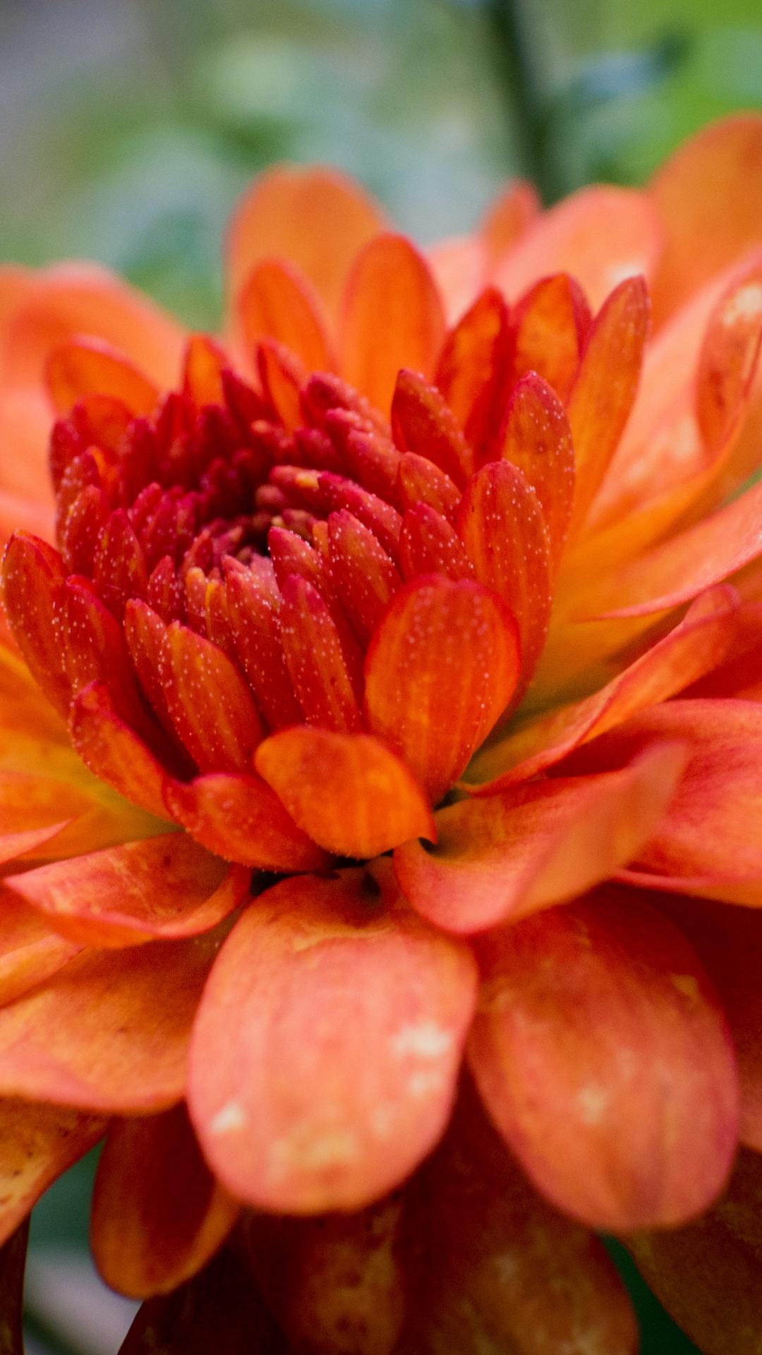 Macro Floral iPhone Wallpaper