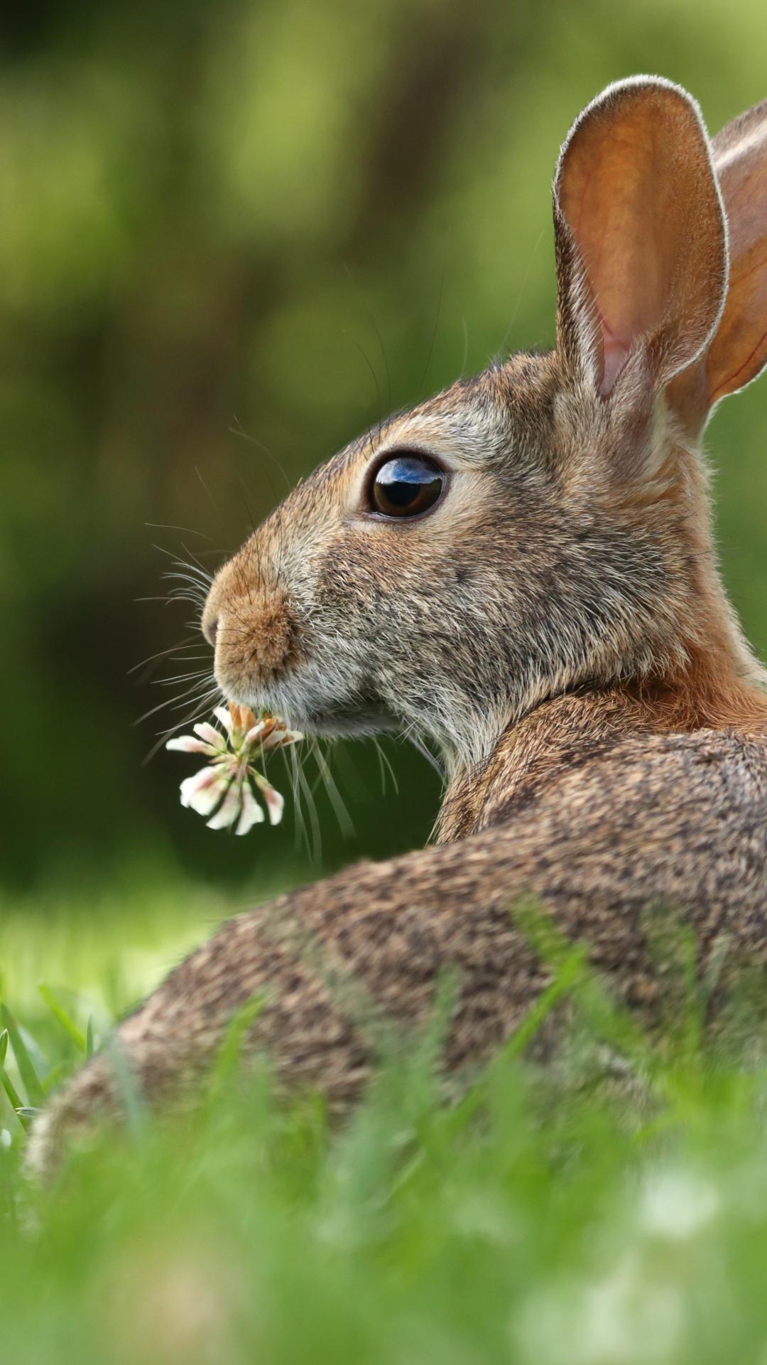 A Bunny iPhone Wallpaper