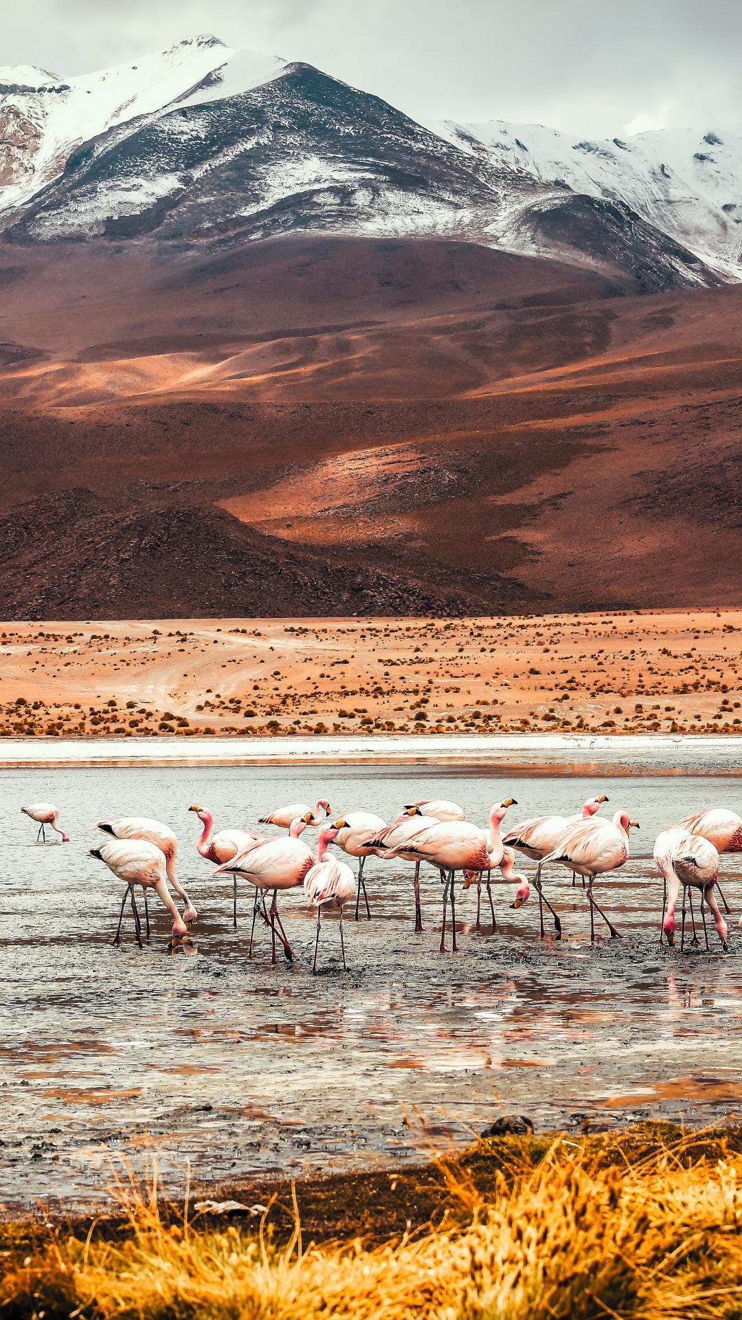 Flamingo Lake iPhone Wallpaper