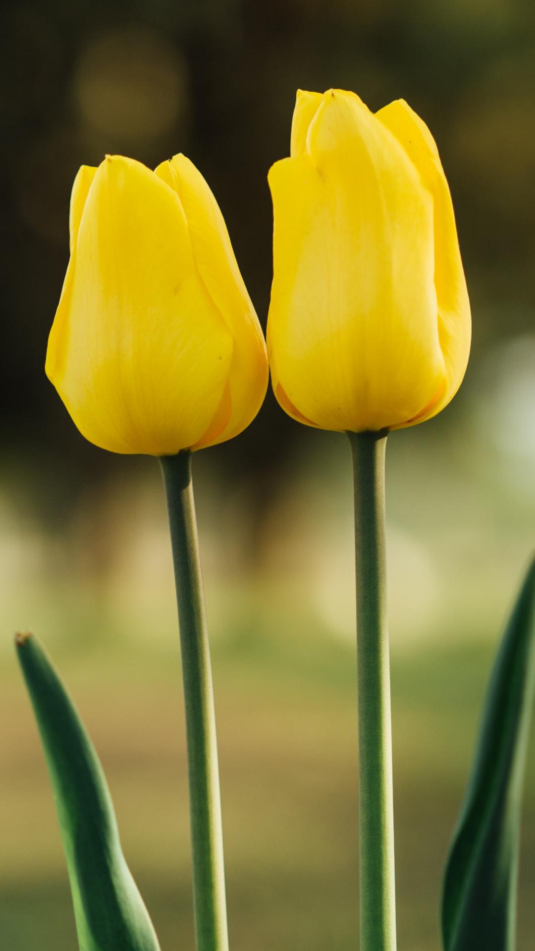 Nature Flower iPhone Wallpaper
