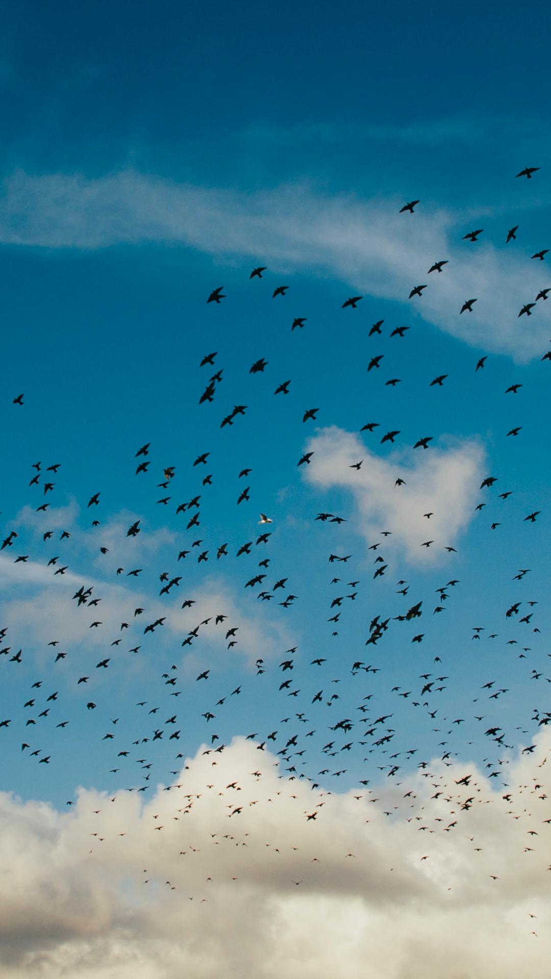 Bird, Sky iPhone Wallpaper