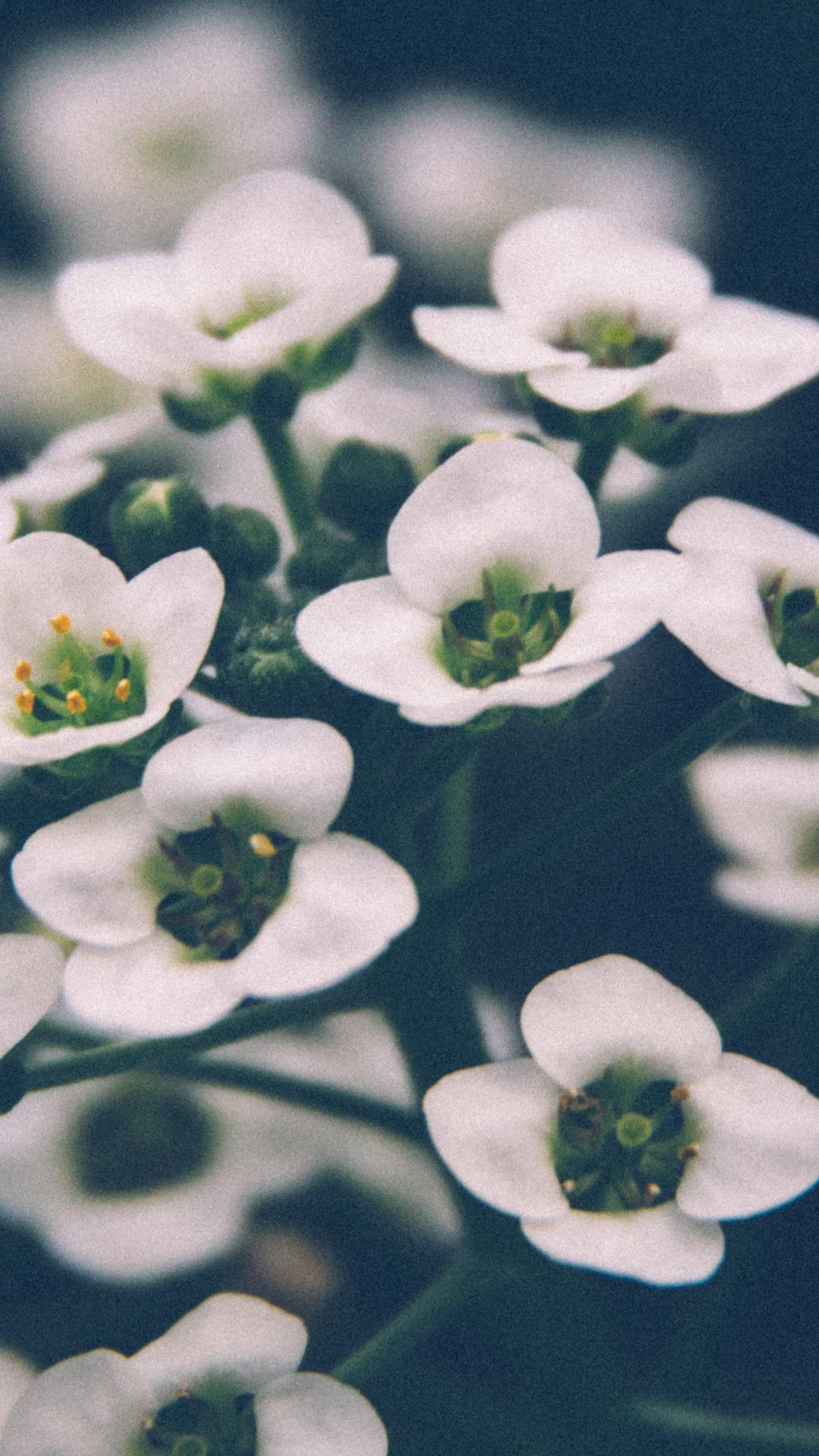 Petal And Garden iPhone Wallpaper