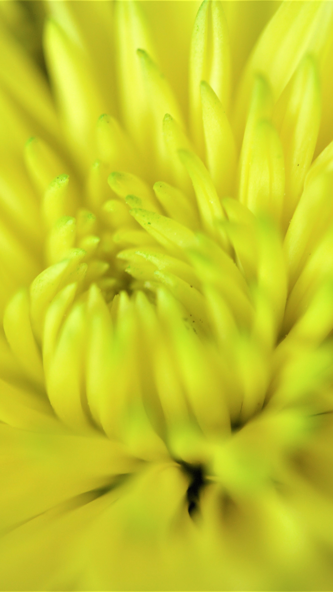 Happy Yellow Flower iPhone Wallpaper