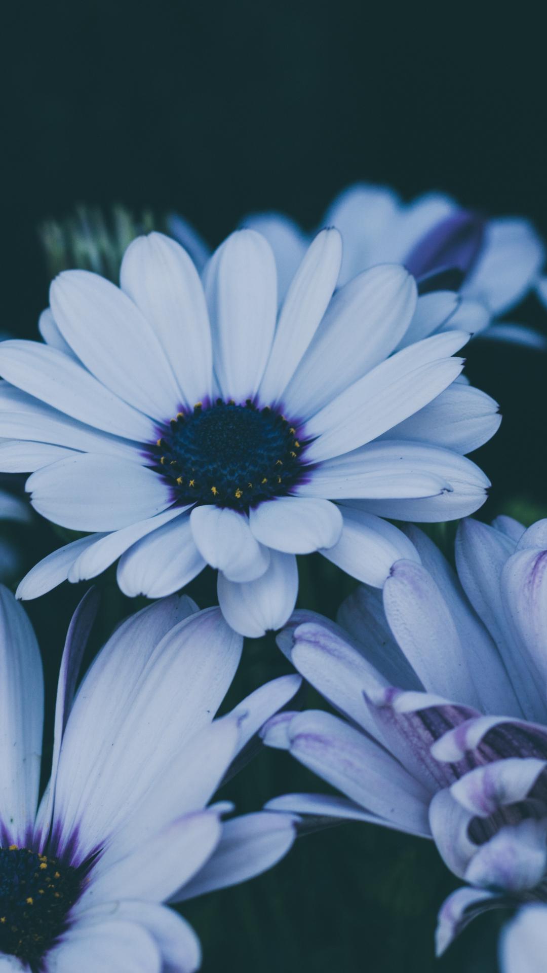 Flower, Blossom iPhone Wallpaper