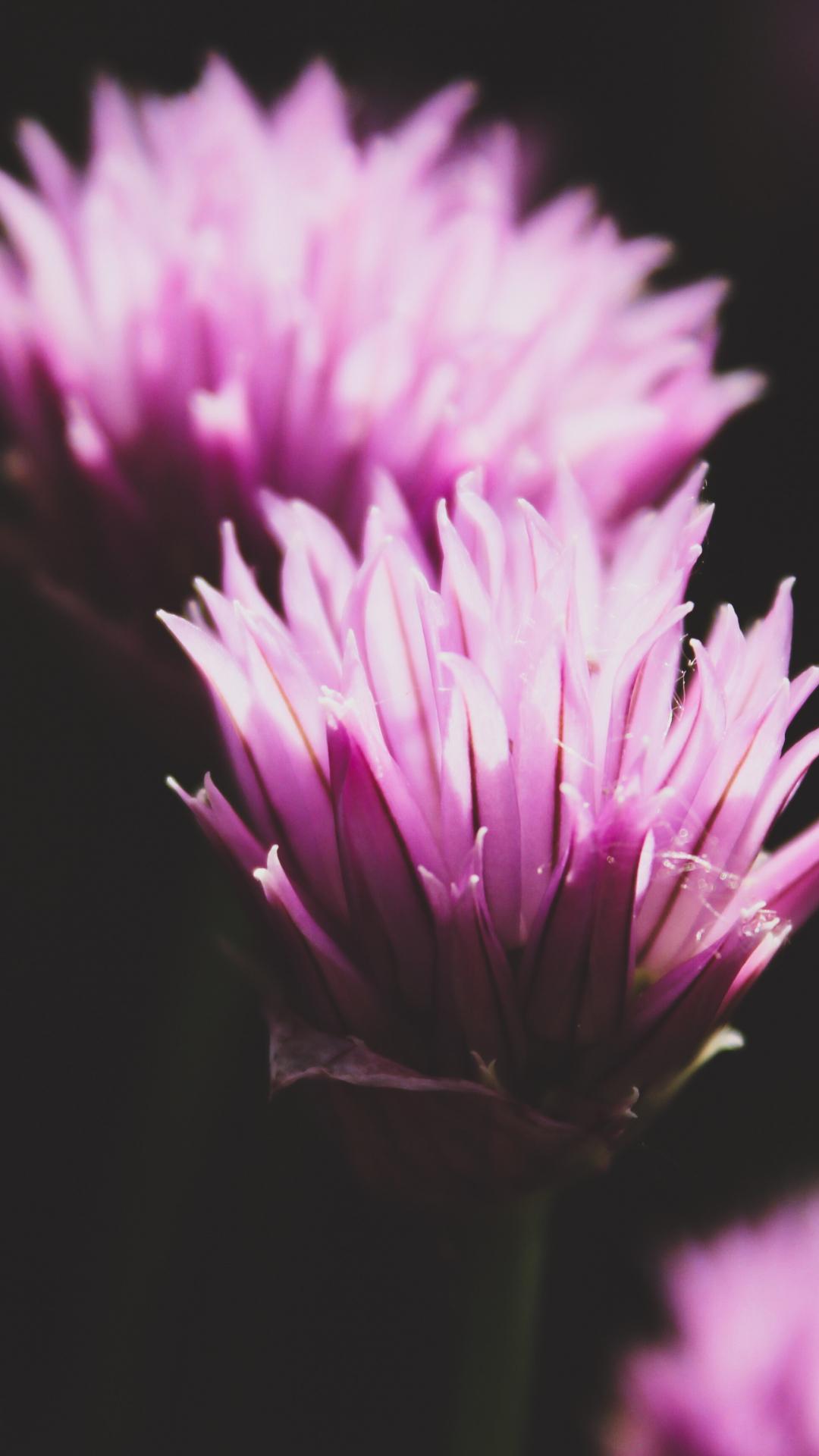 Plant, Flora iPhone Wallpaper