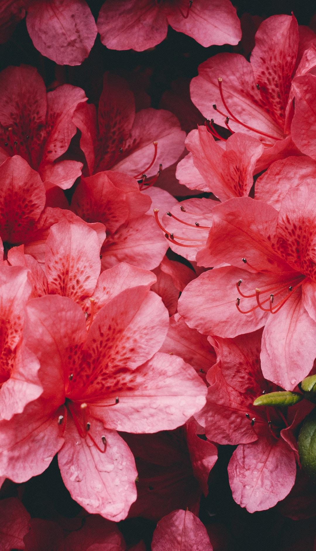 Leafe, Bloom iPhone Wallpaper