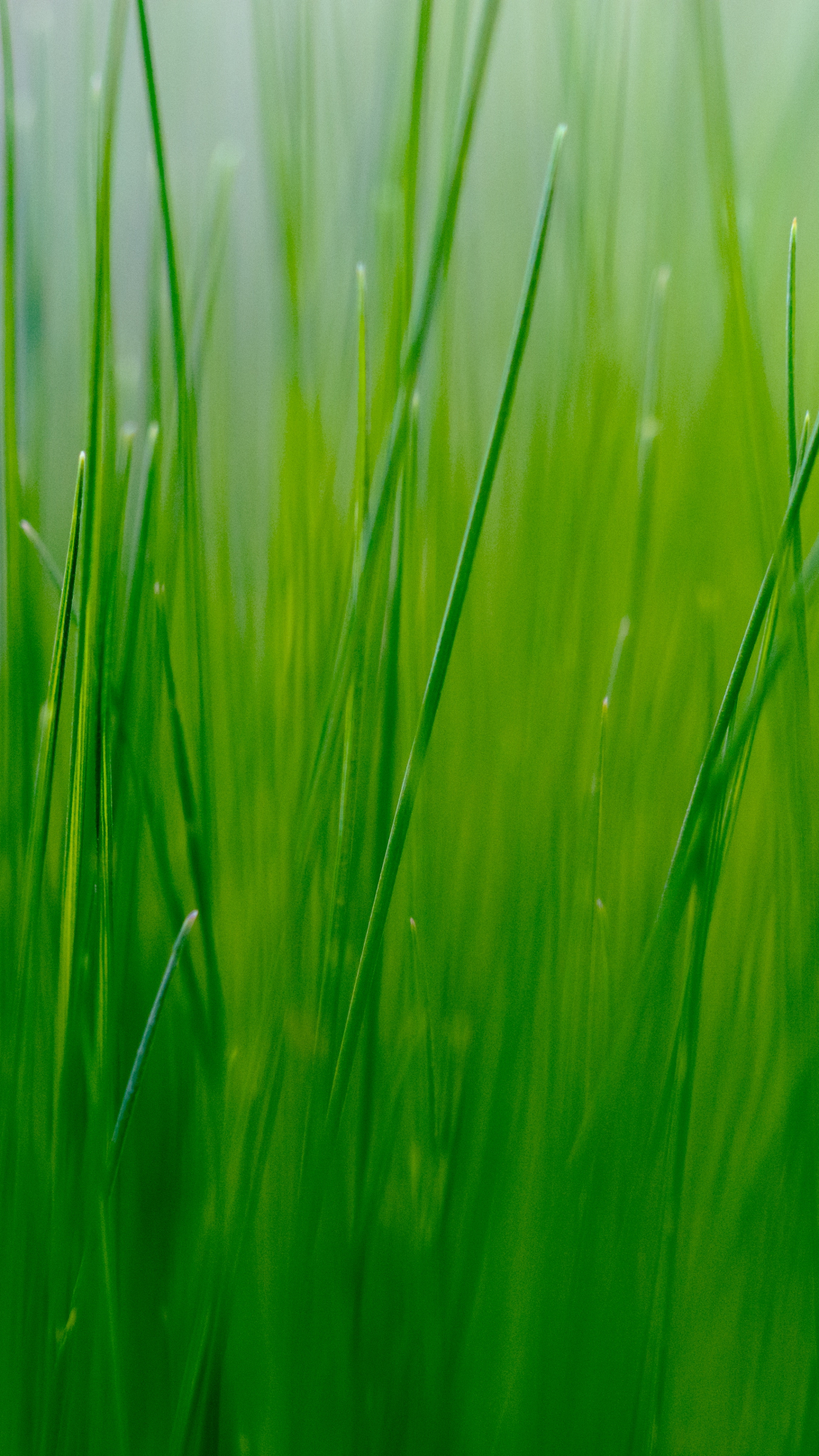 Blades of Grass iPhone Wallpaper