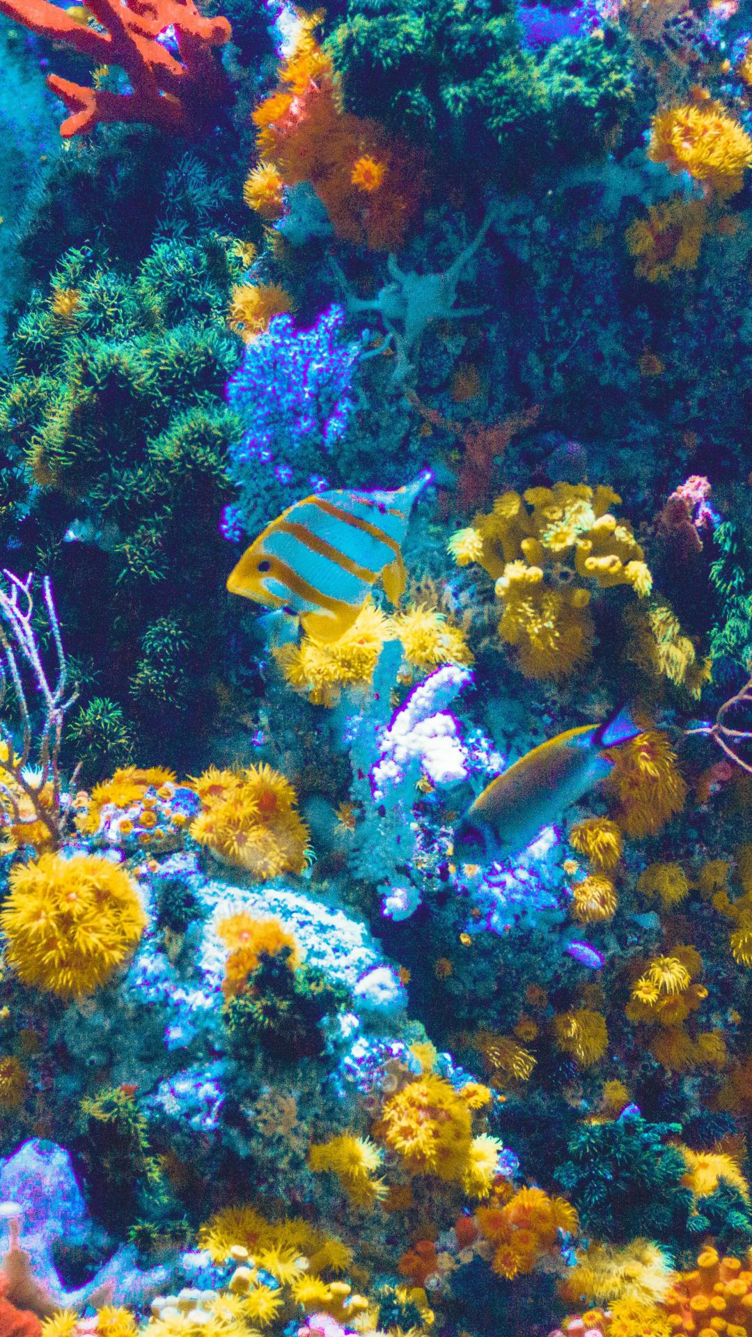 Aquarium And Fish IPhone Wallpaper