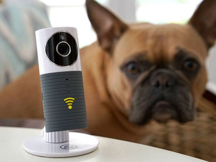 Sinji Smart Wi Fi Camera  - Sinji Smart Wi Fi Camera - 9 Life-Changing Gadgets All Pet Owners Need to Know About