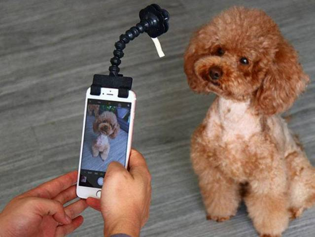 Pet Selfie Attachment  - Pet Selfie Attachment 639x480 - 9 Life-Changing Gadgets All Pet Owners Need to Know About