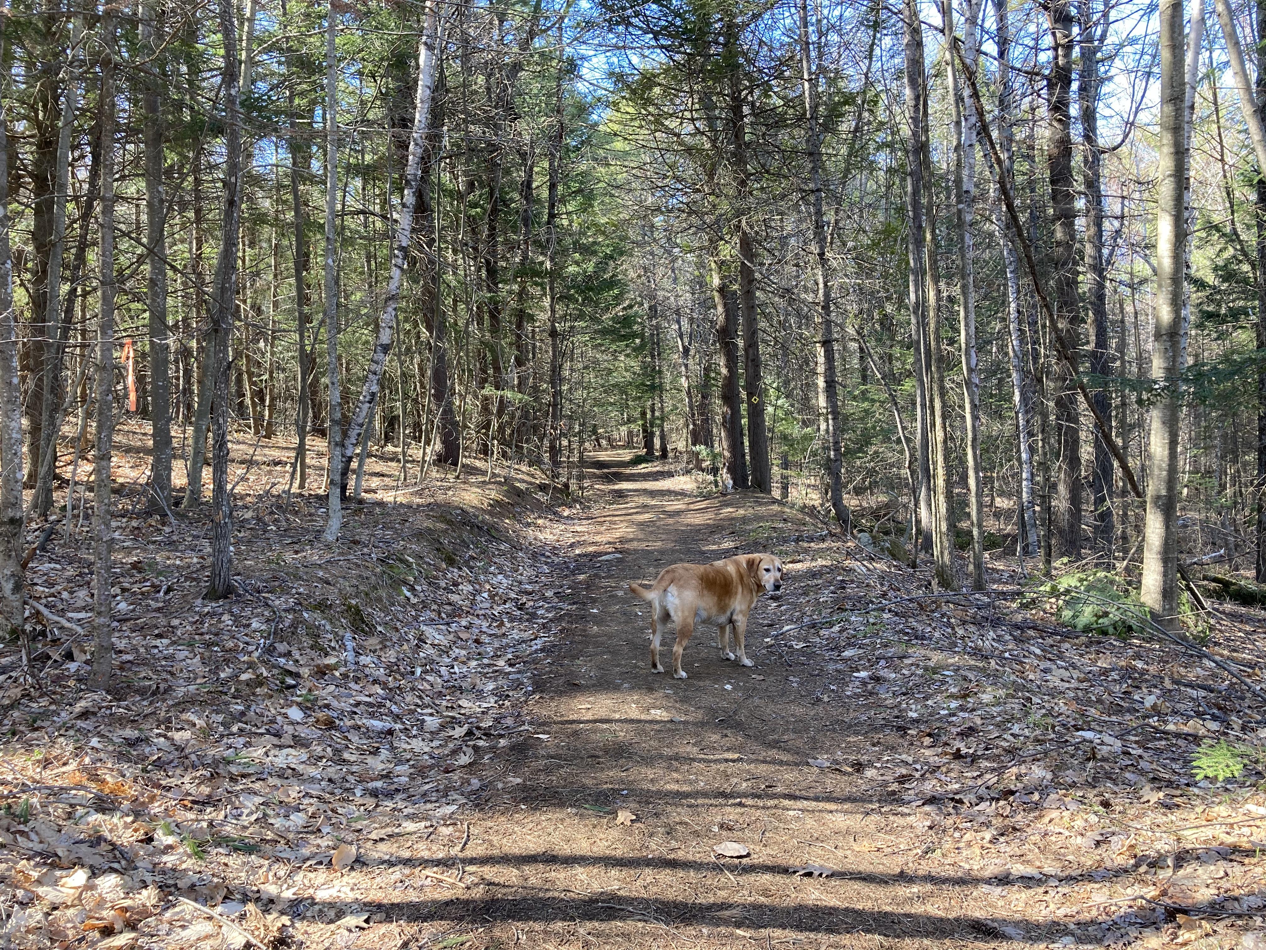dog path SE