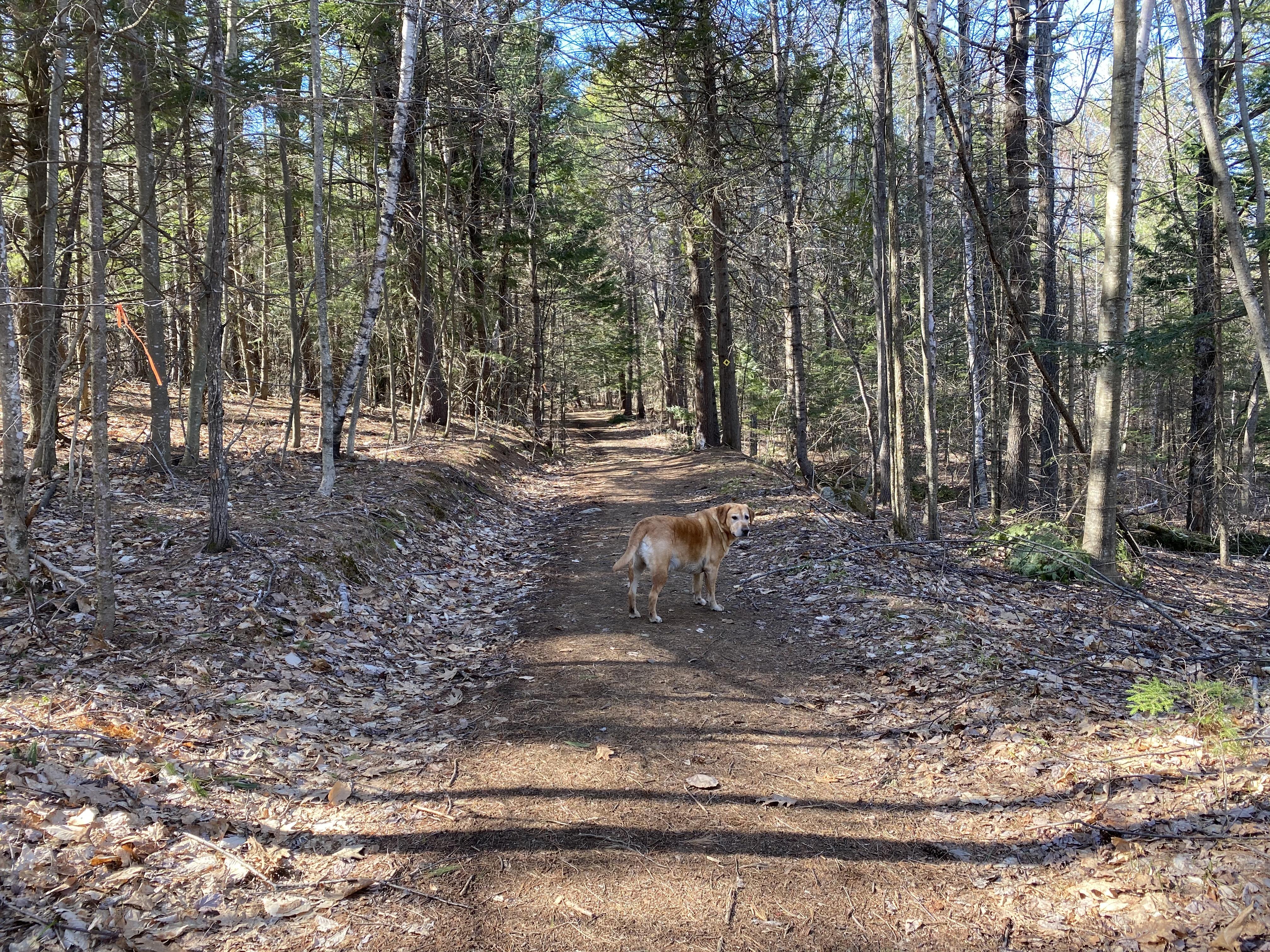 dog path 11